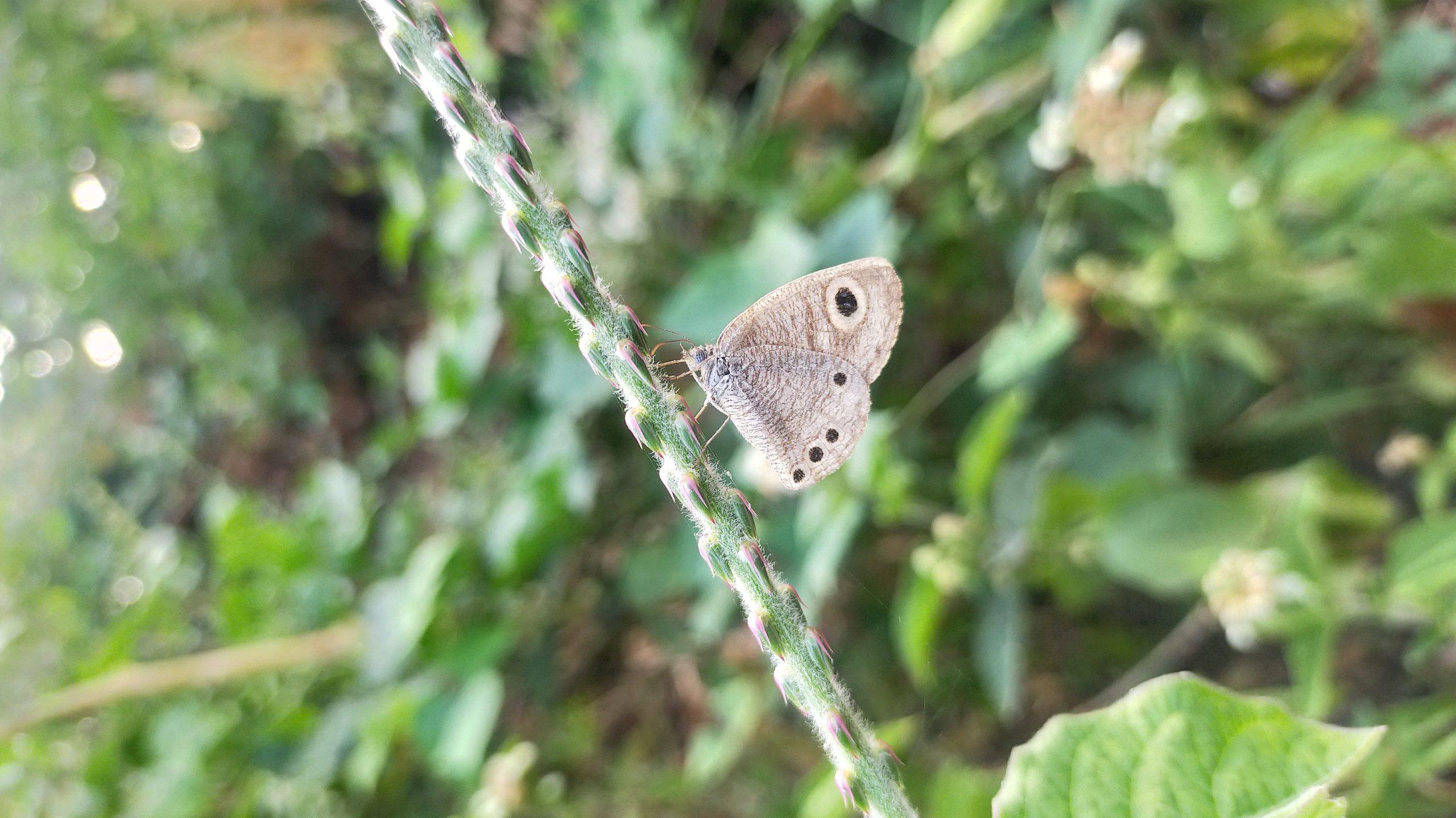 A butterfly on a plant stem