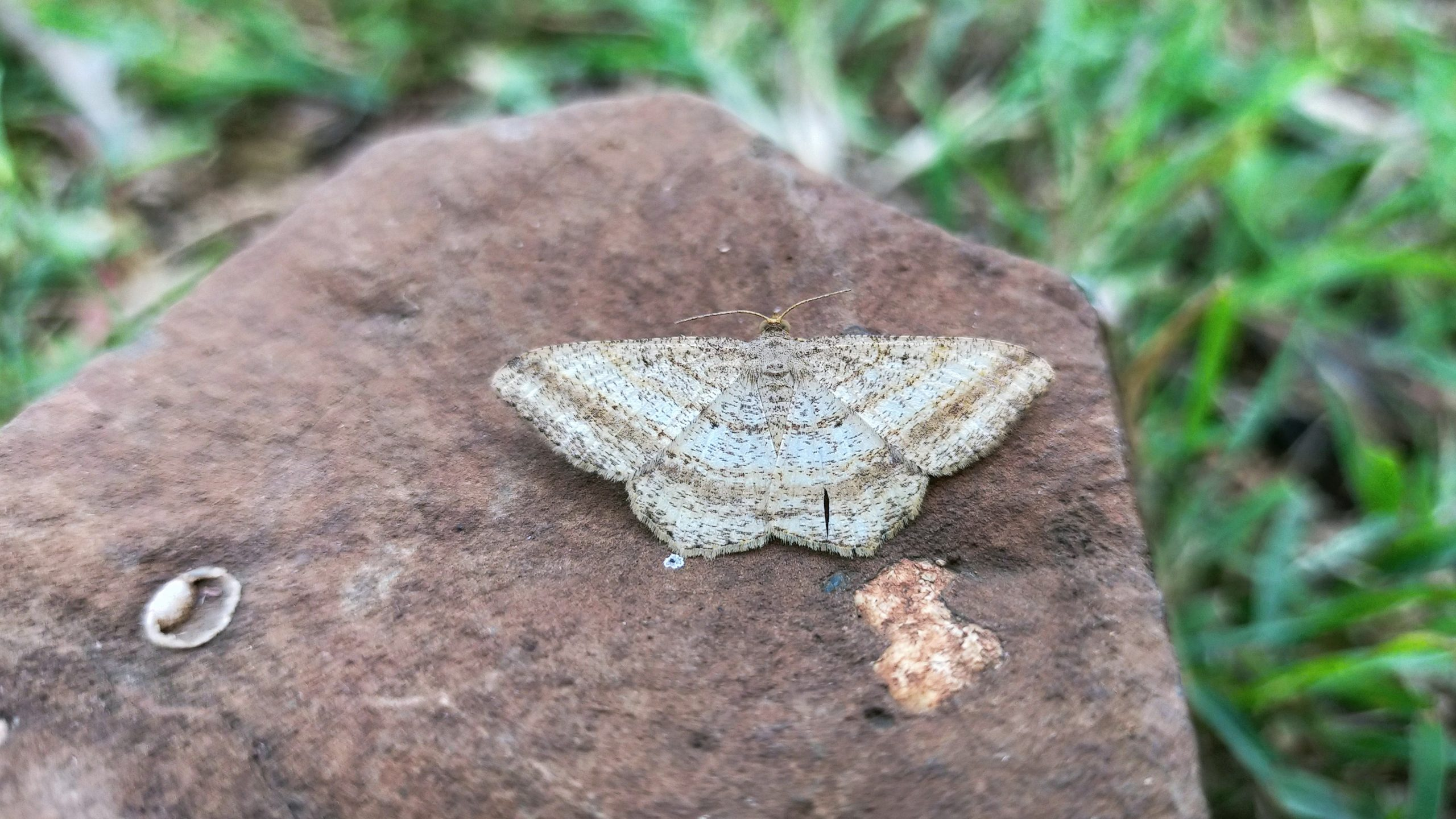 A butterfly on a rock