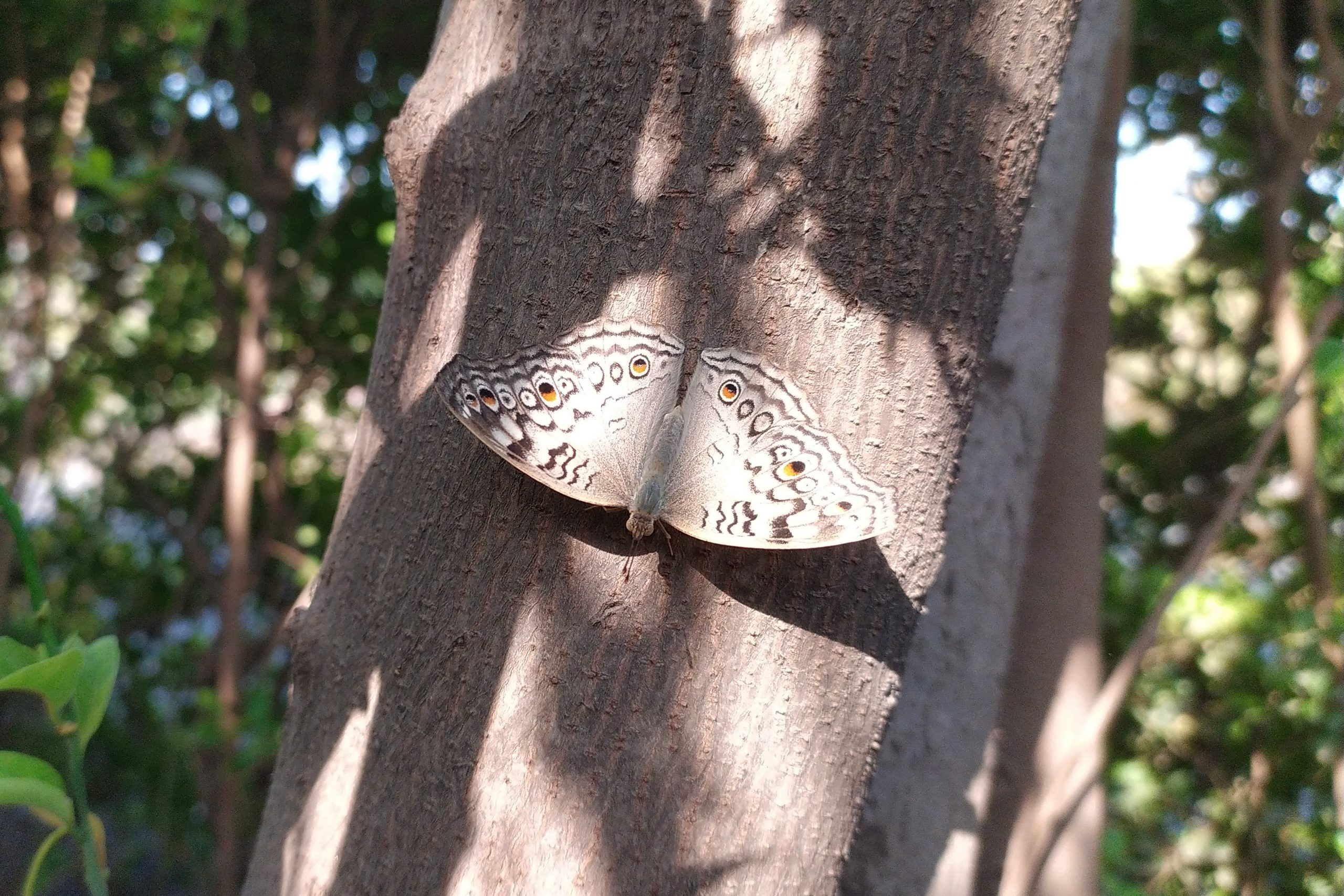 A butterfly on a tree bark