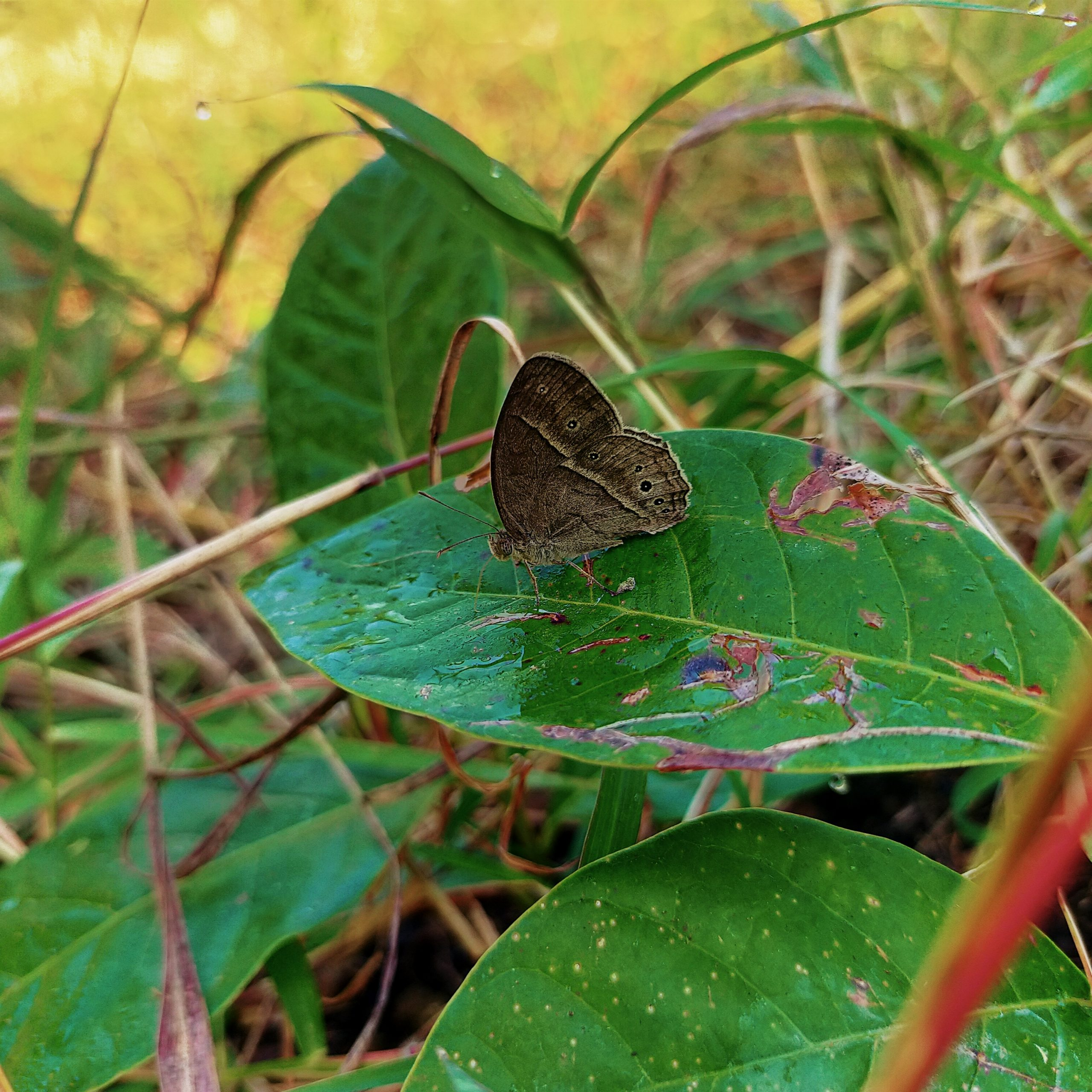 A butterfly sitting on leaf