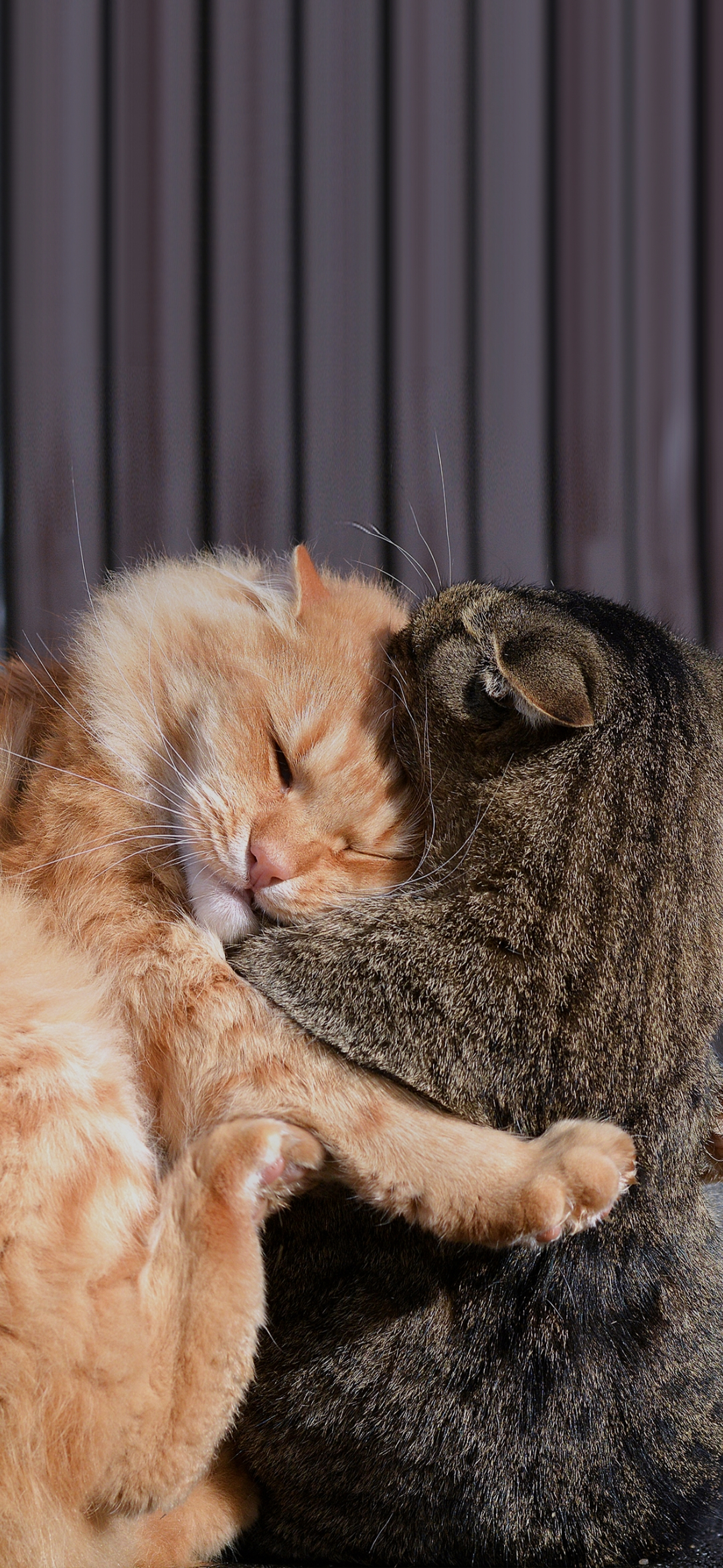 A cat and otter sleeping together