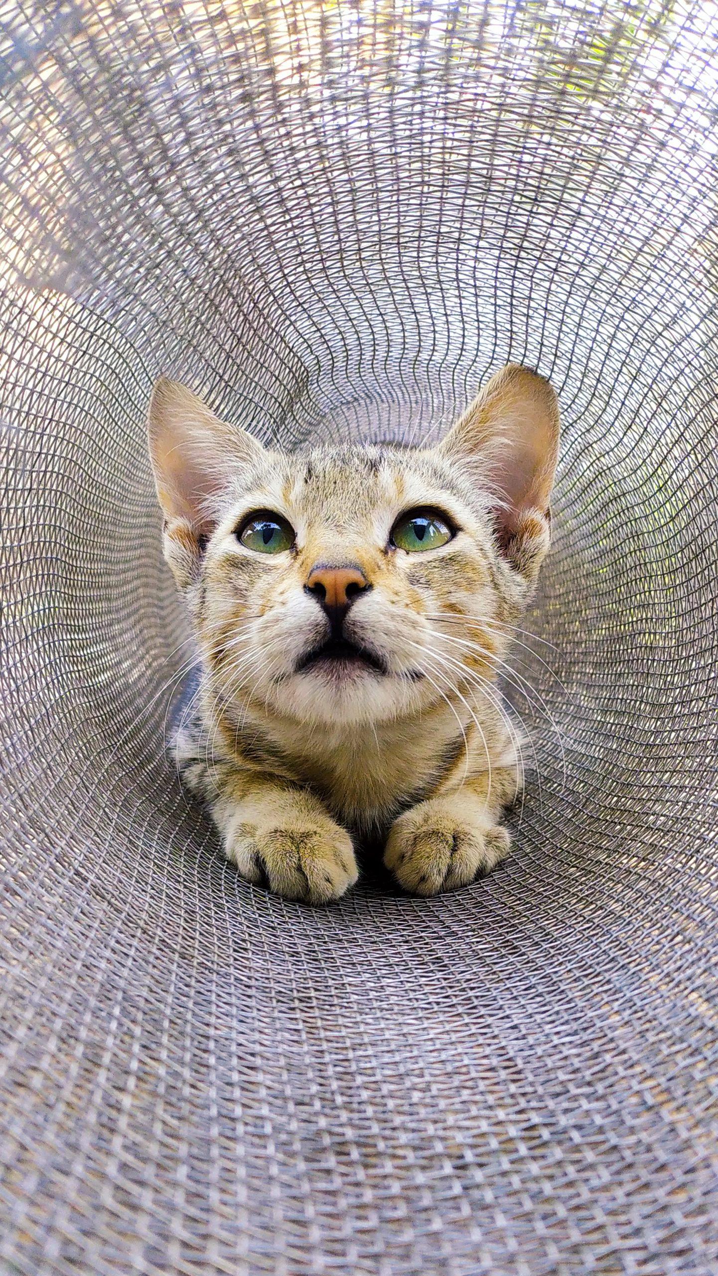 A cat on net