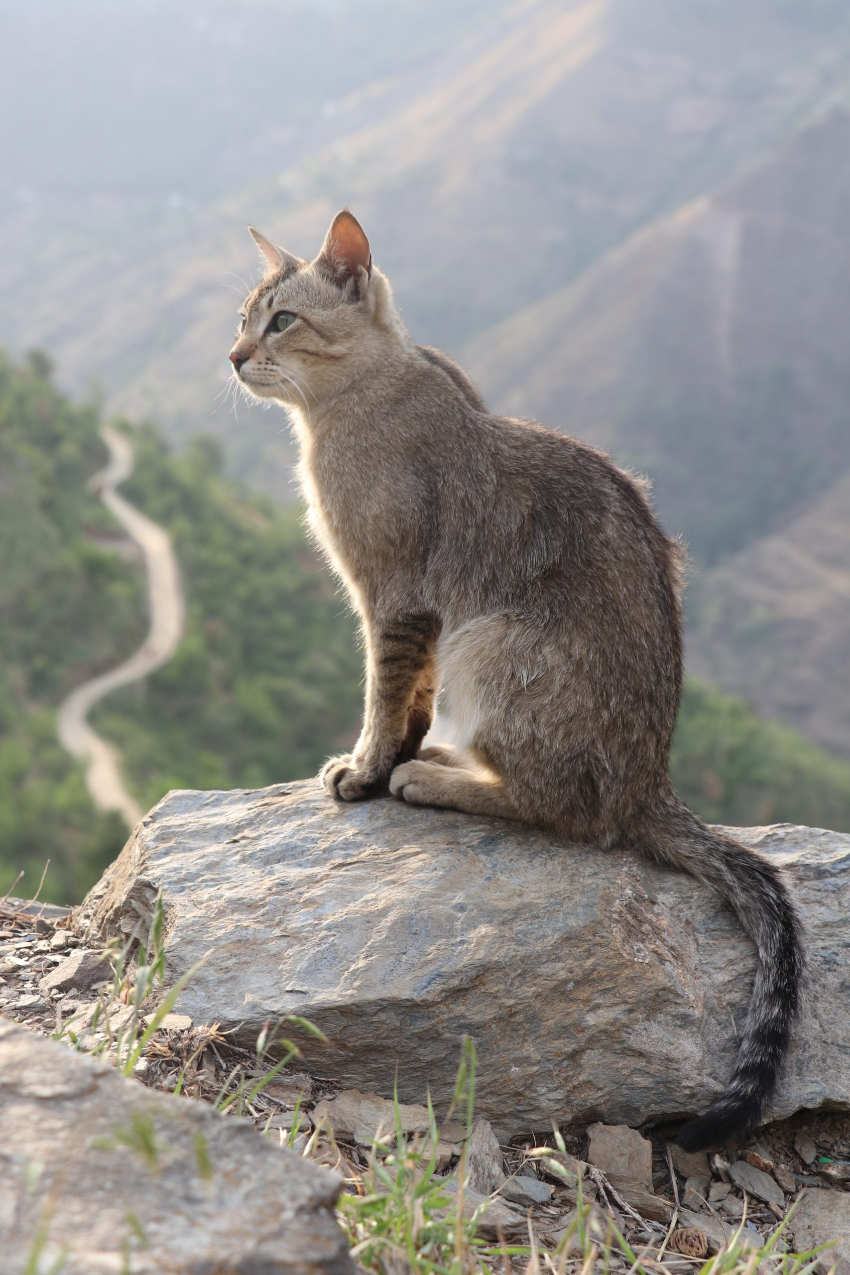 A cat sitting on a stone