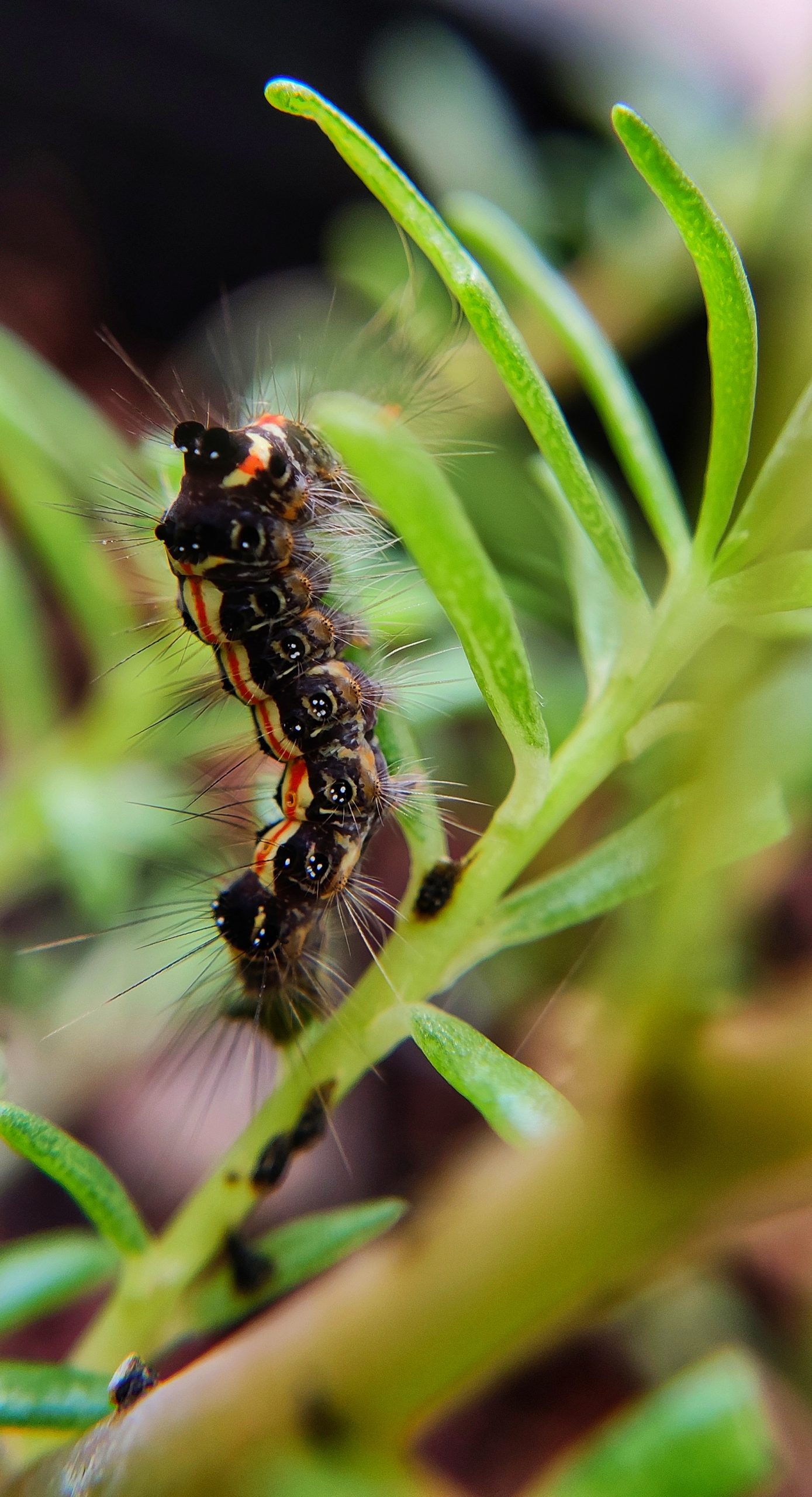 A caterpillar on a leaf