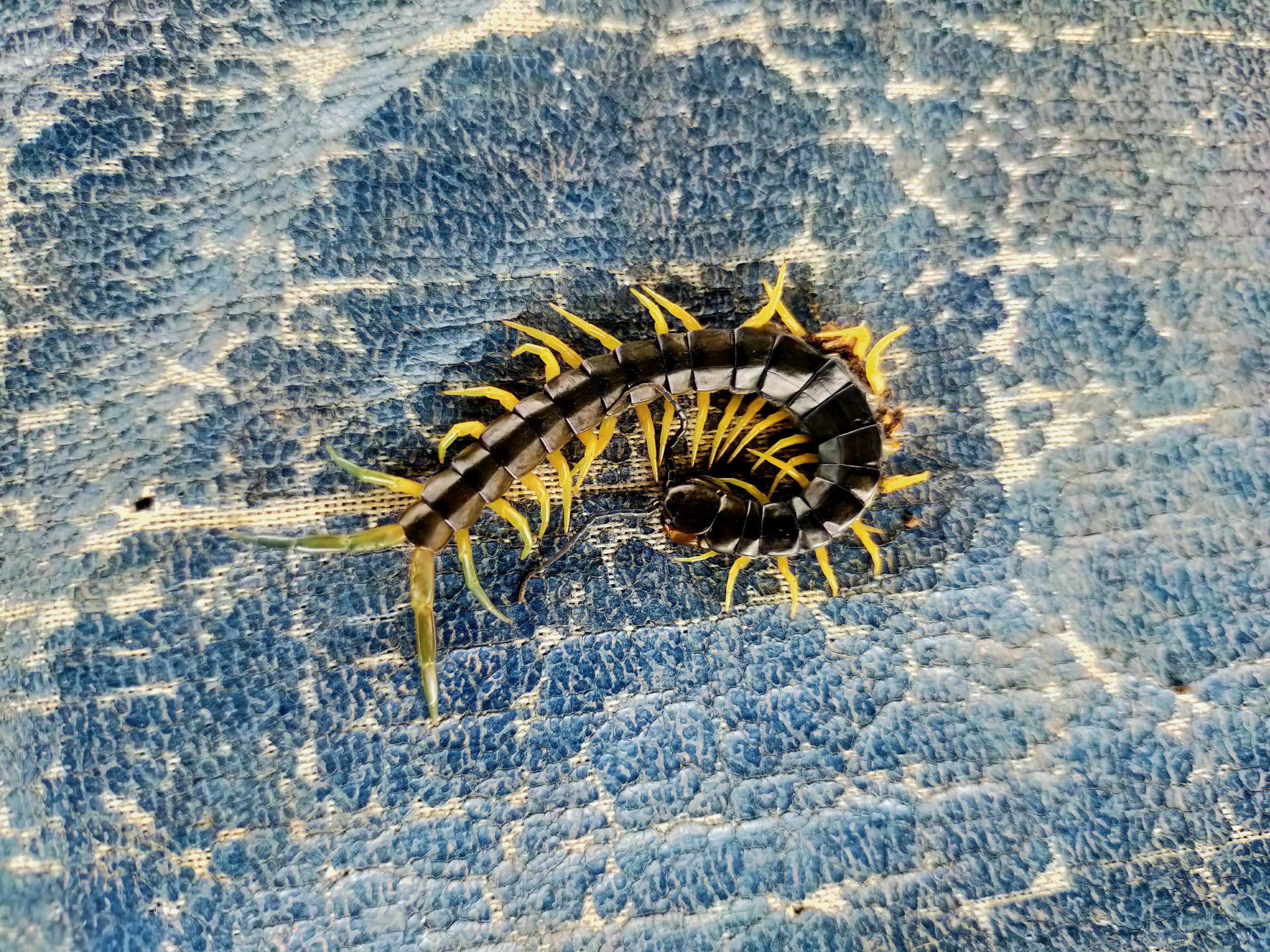 A centipede on the ground