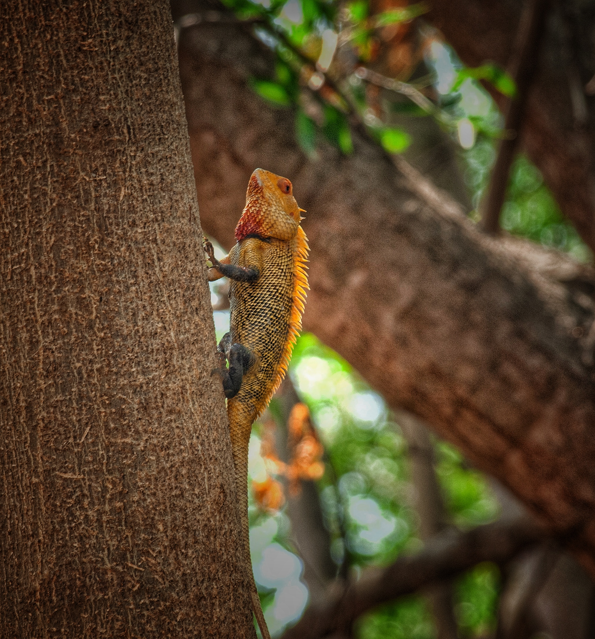 A chameleon on a tree