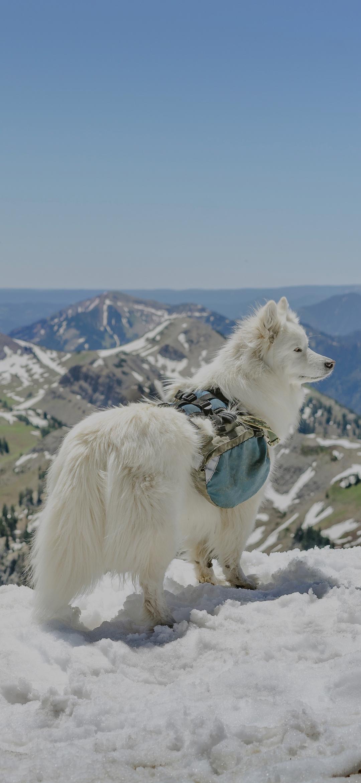 A dog on a snowy mountain