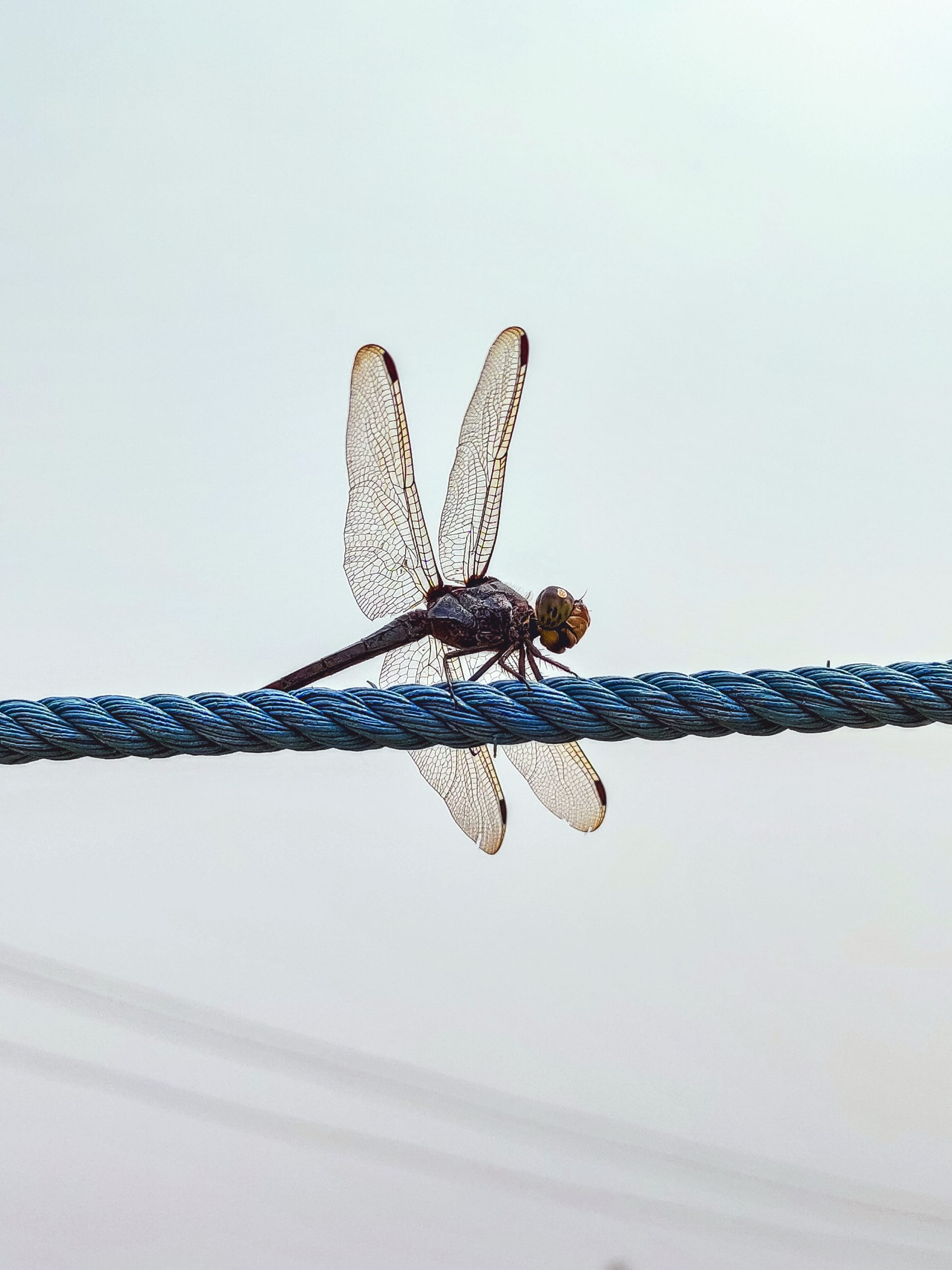 A dragonfly sitting on a rope