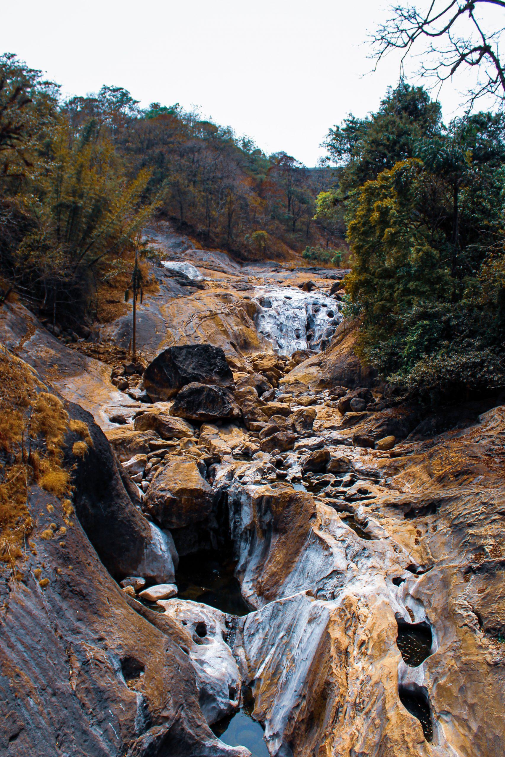 A dry river in a jungle
