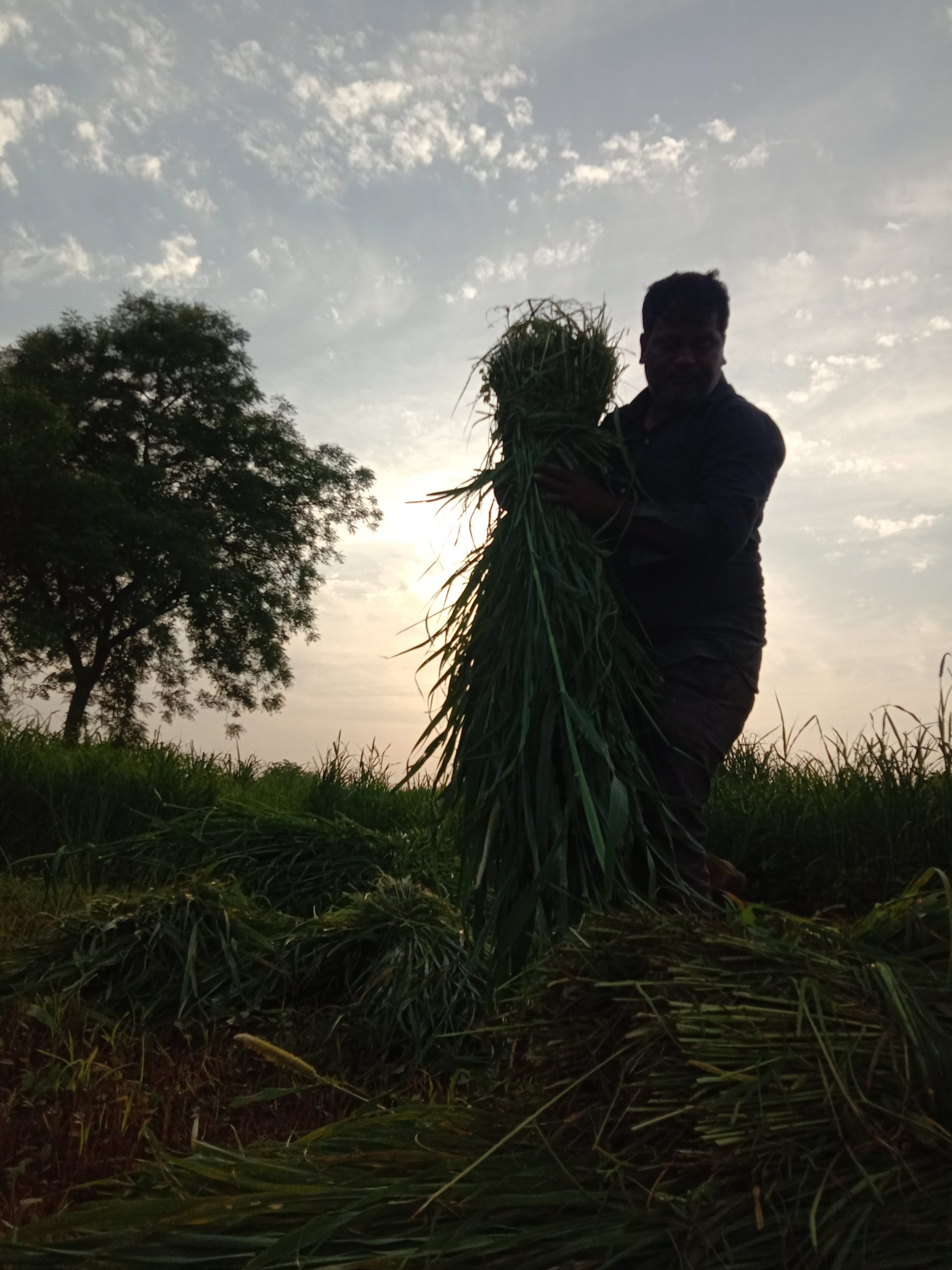 A farmer working in a field