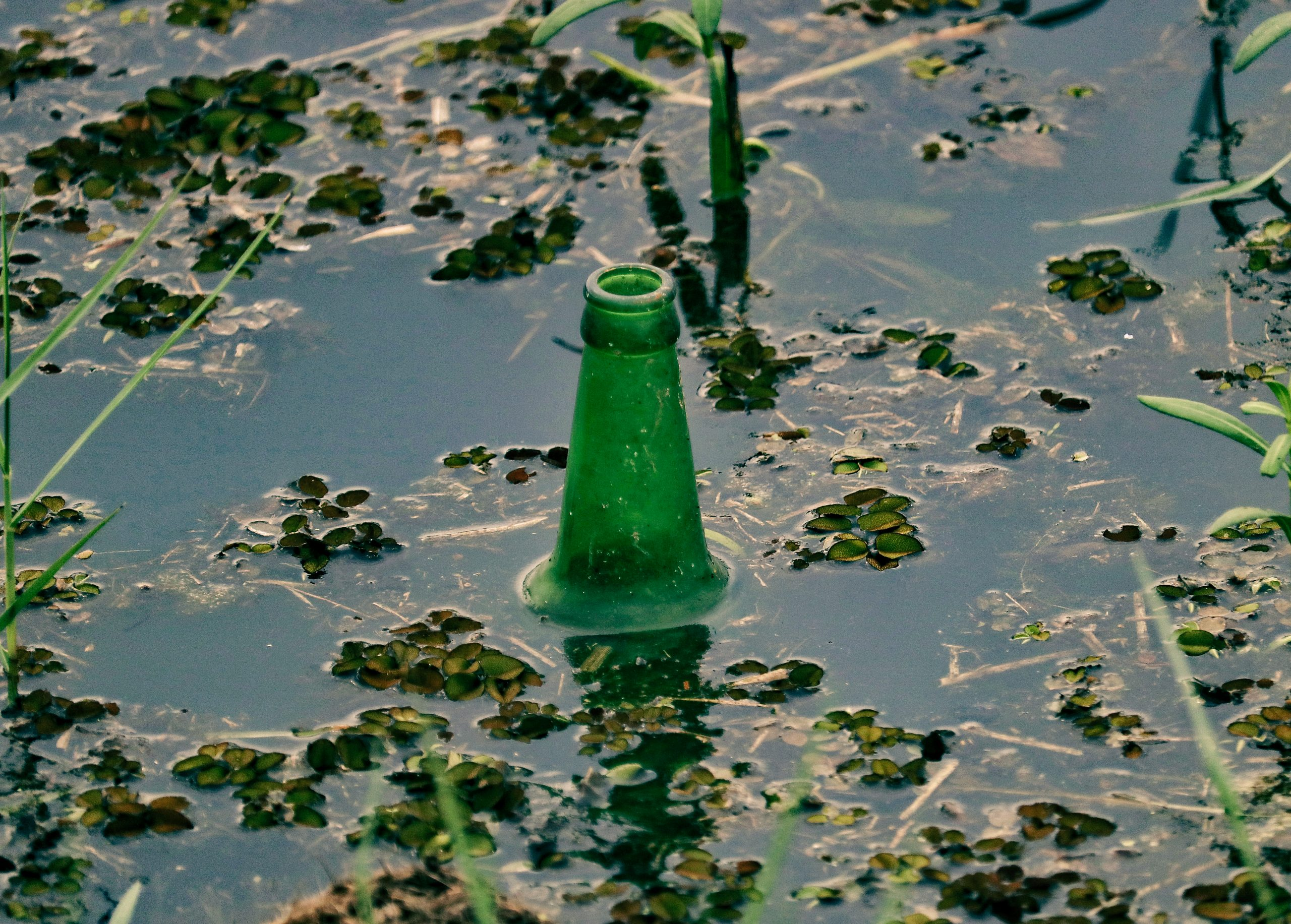 A glass bottle in a pond