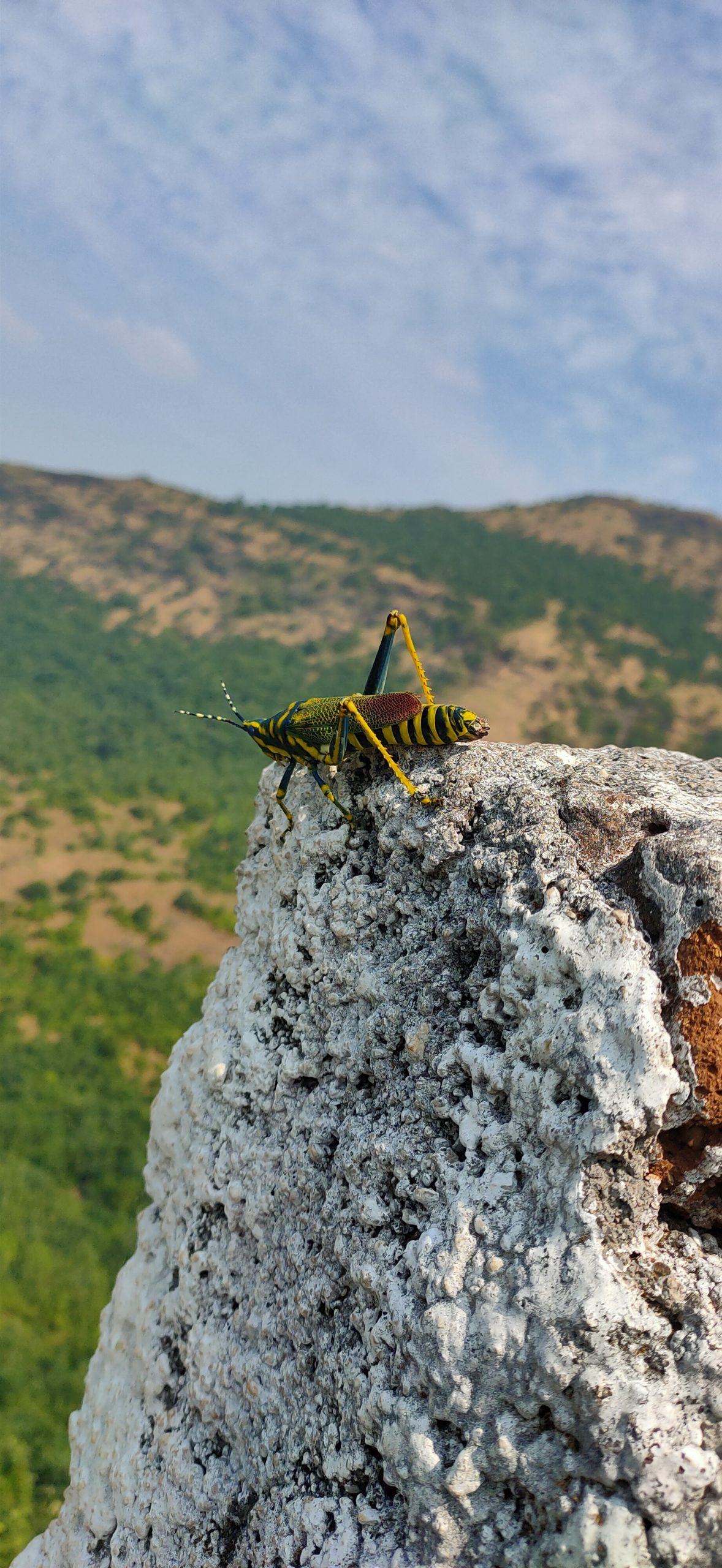 A grasshopper on a rock