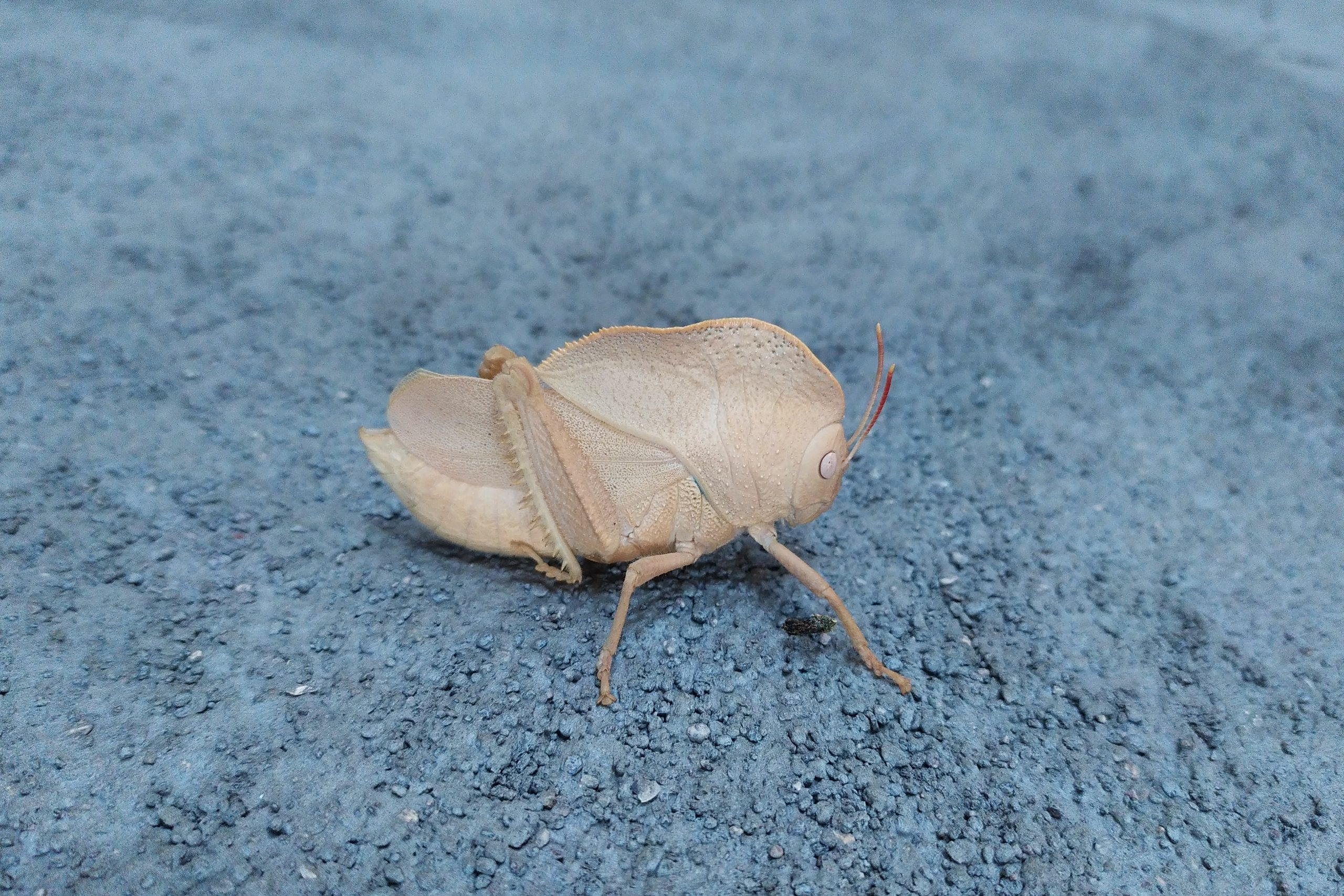 A grasshopper on a surface