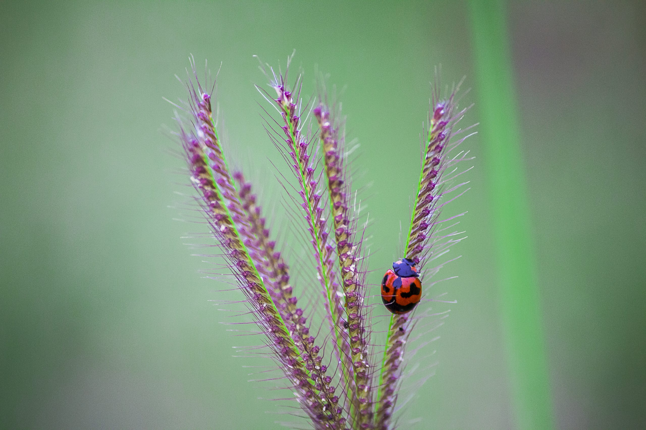 A lady bug on a plant