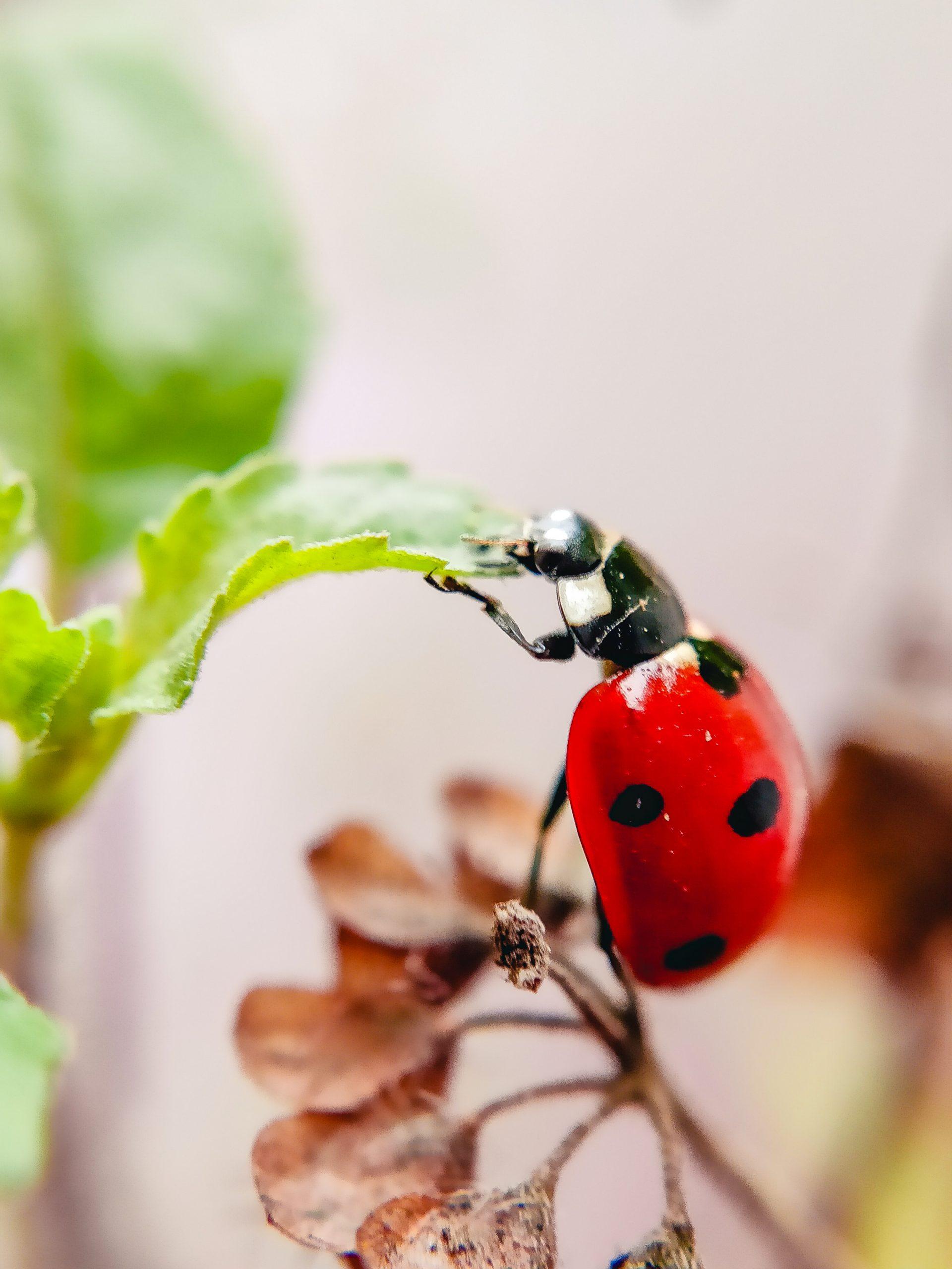 Red bug on plant leaf