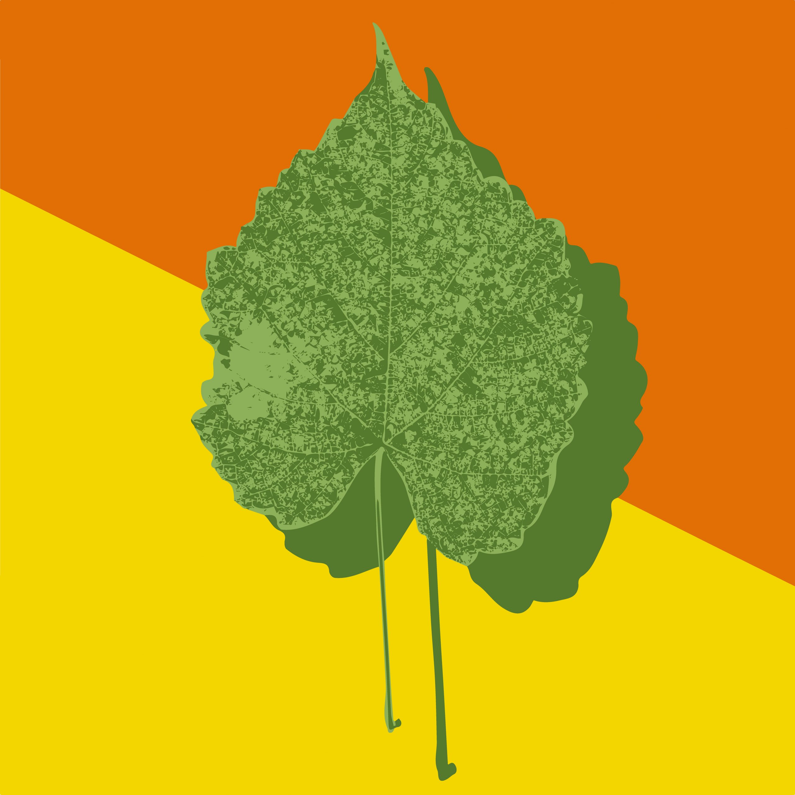 A leaf illustration