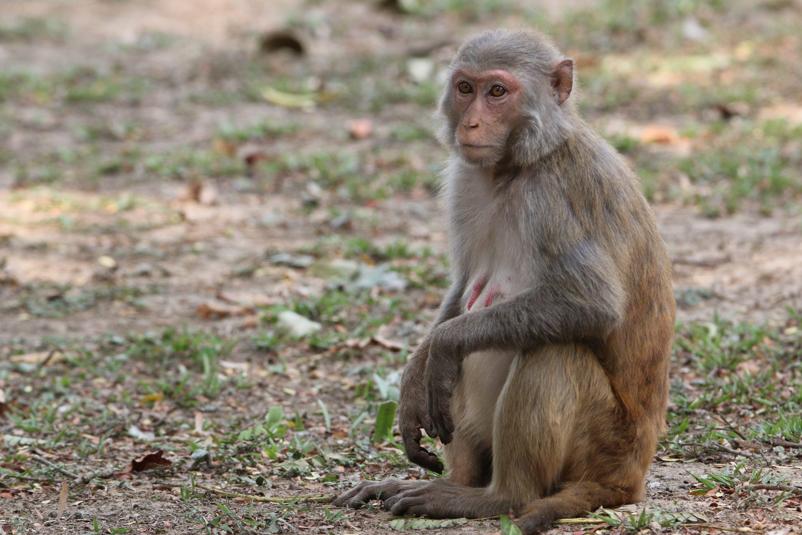 A monkey in a jungle