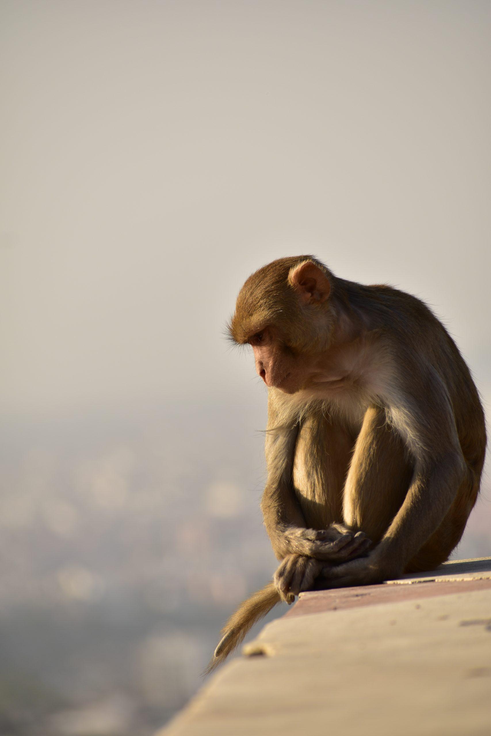 A monkey on a cliff