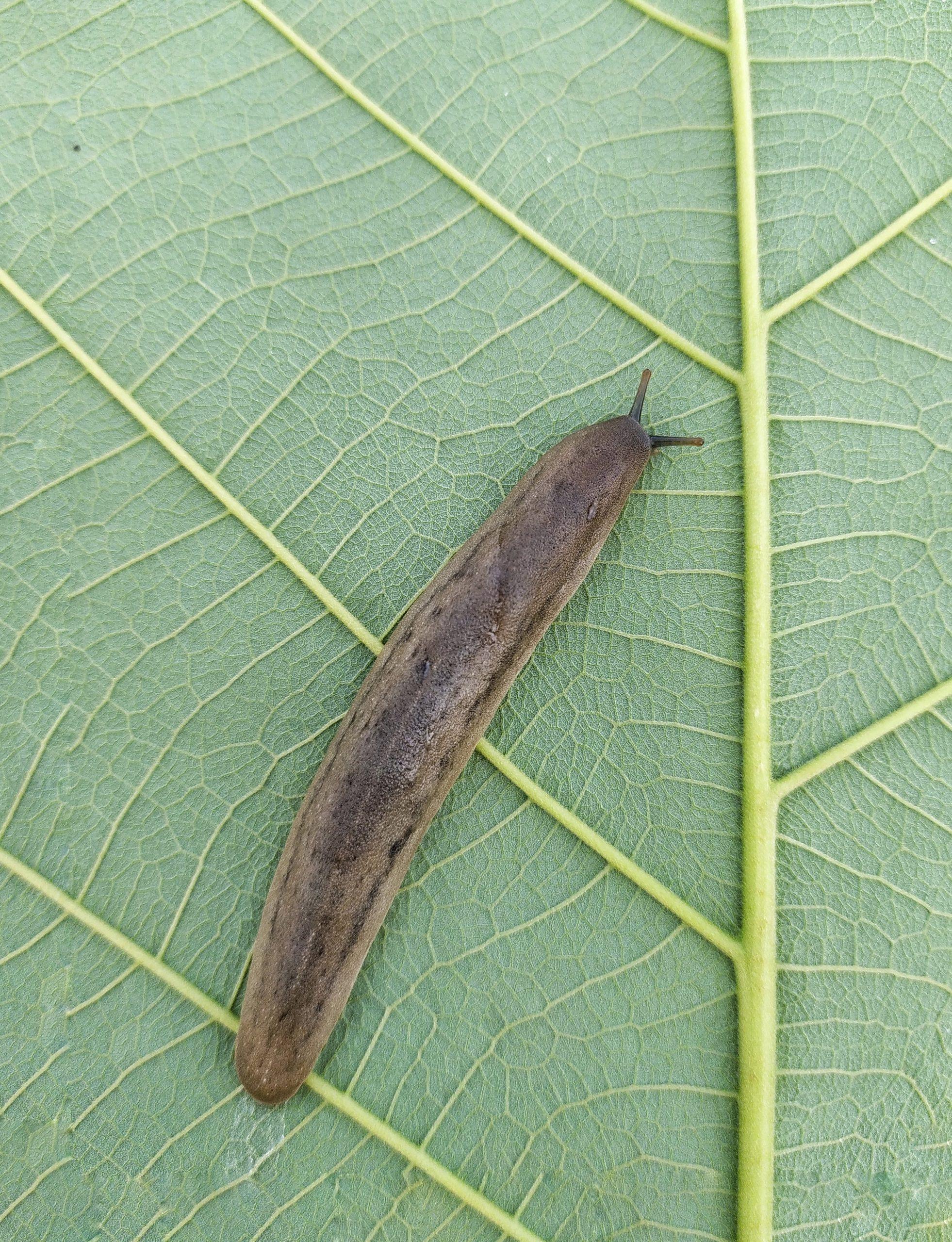 A snail 🐌 on leaf