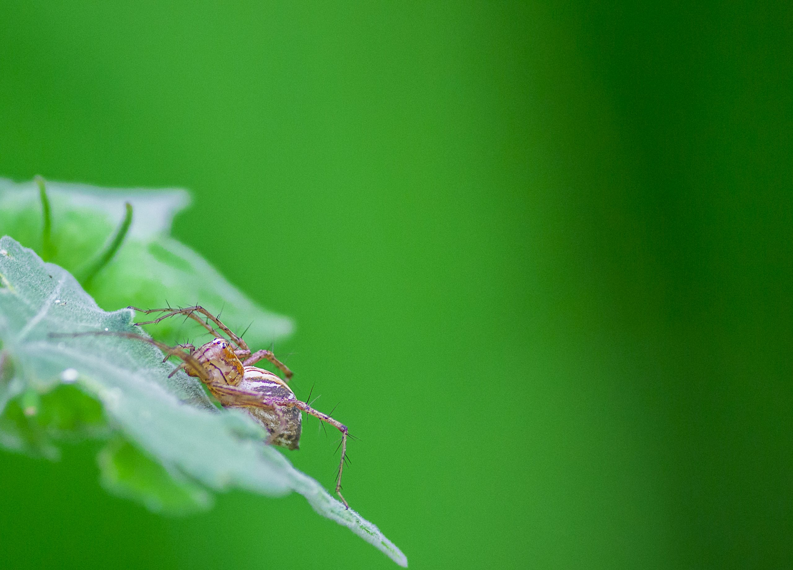 A spider on a leafq