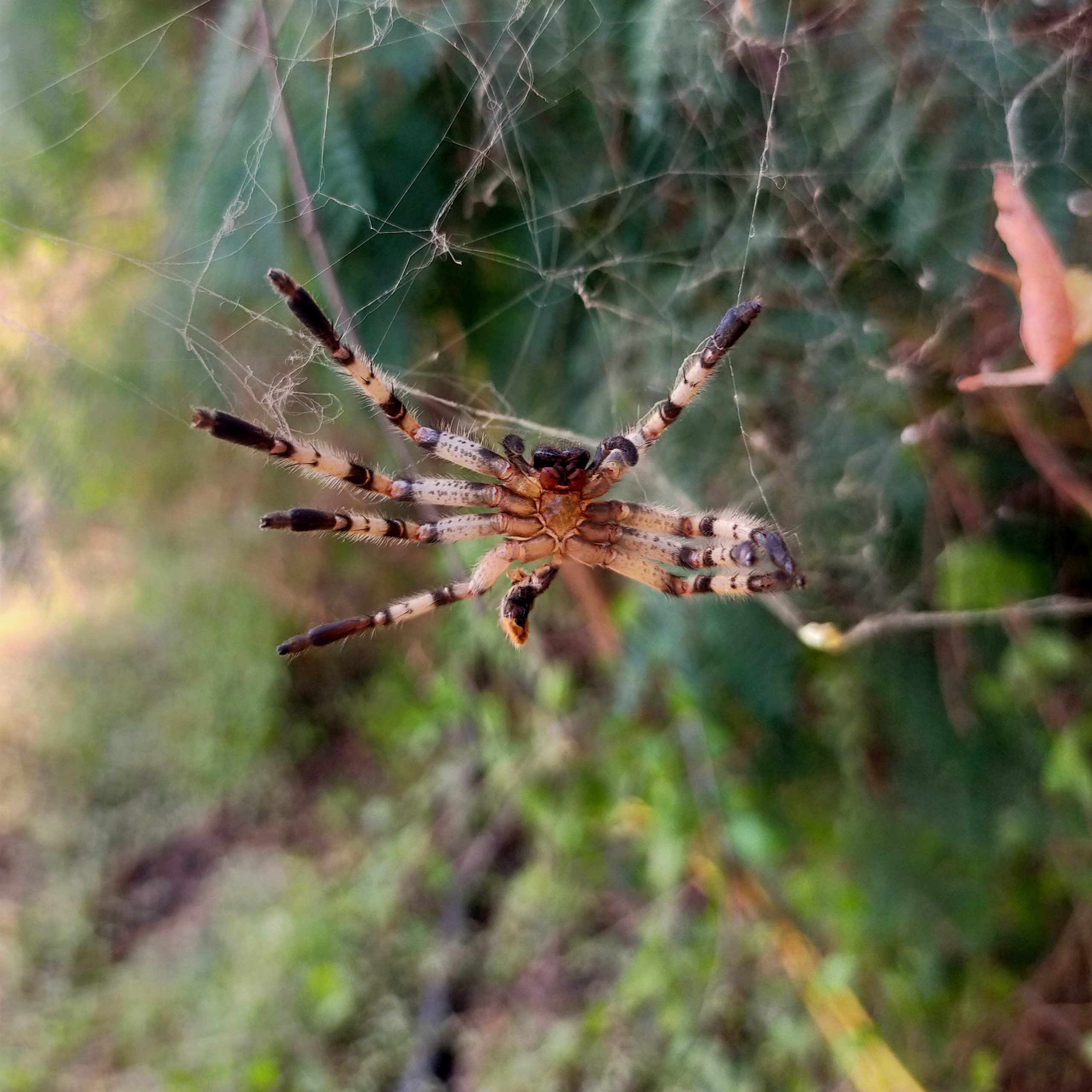 A spider on the web