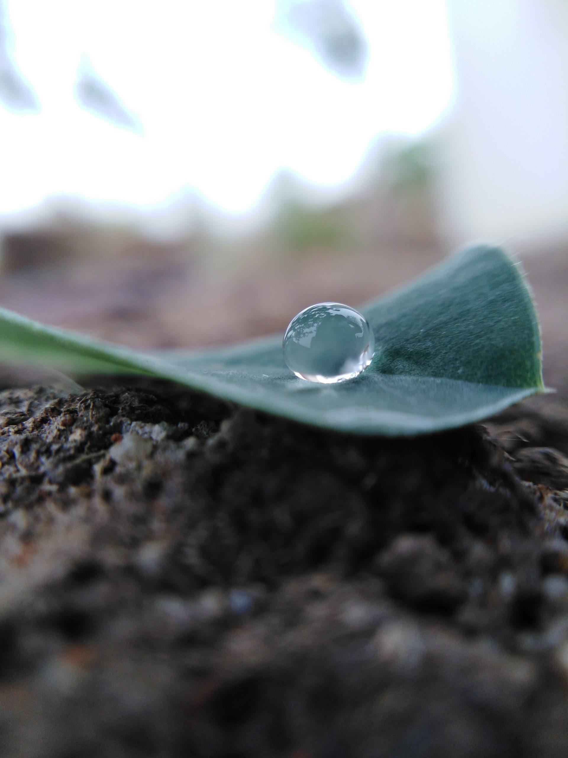 A water drop on a leaf