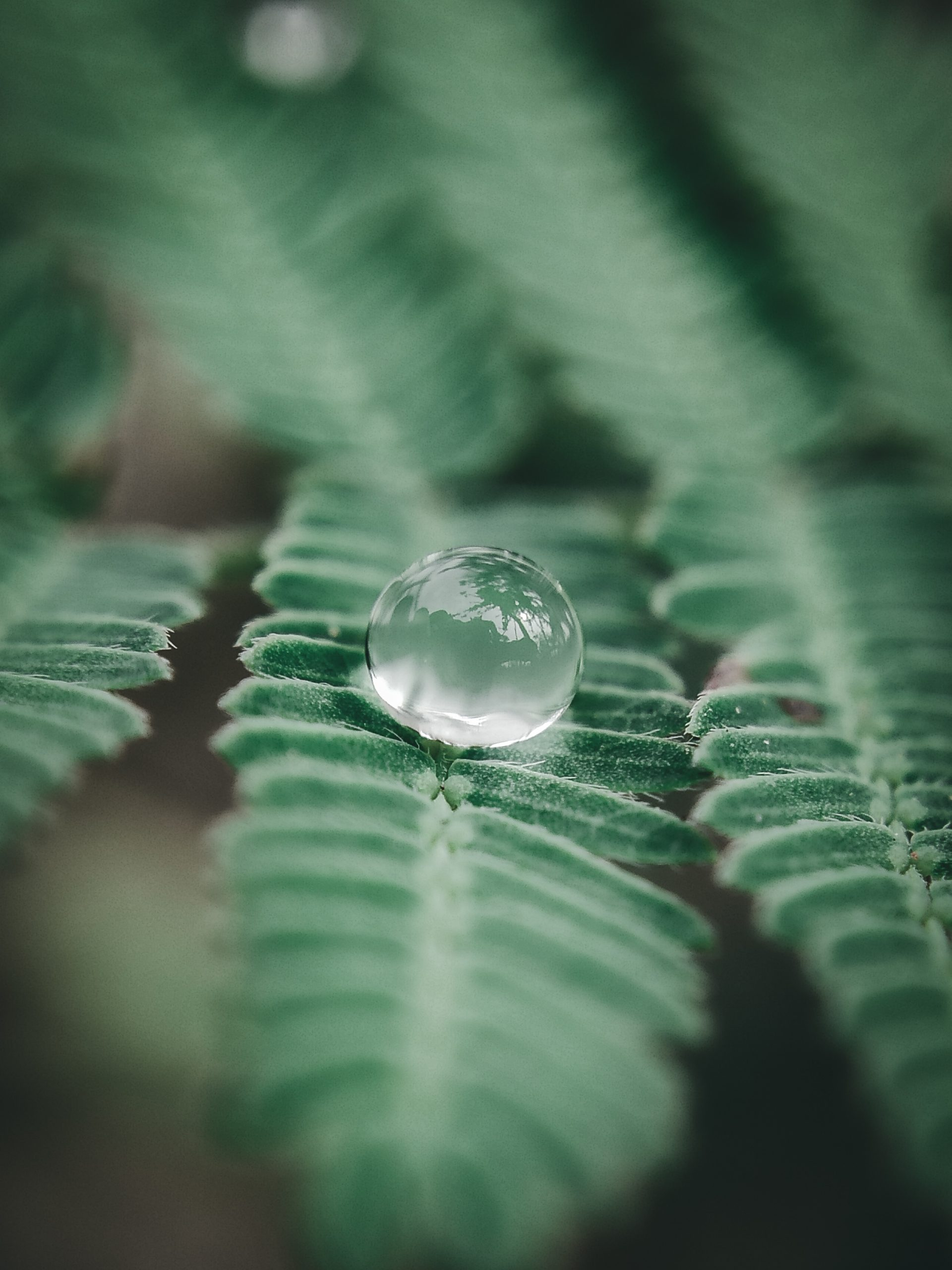 A water drop on green leaves
