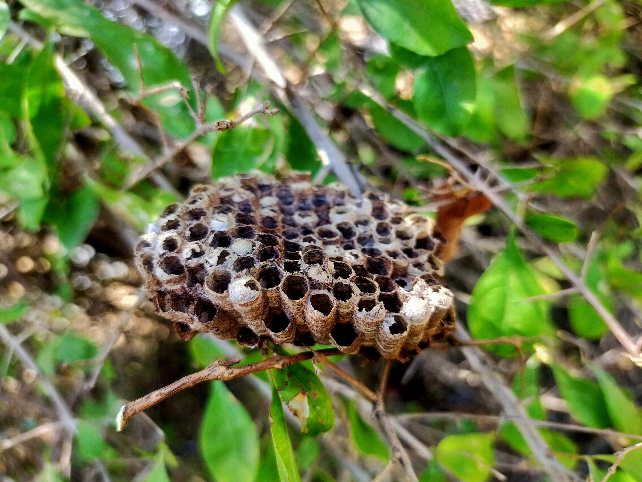 An insect nest on plant