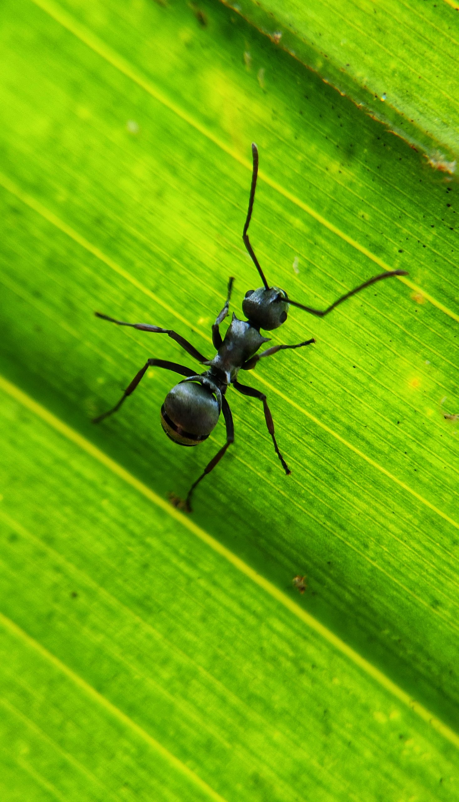 An ant on green leaf