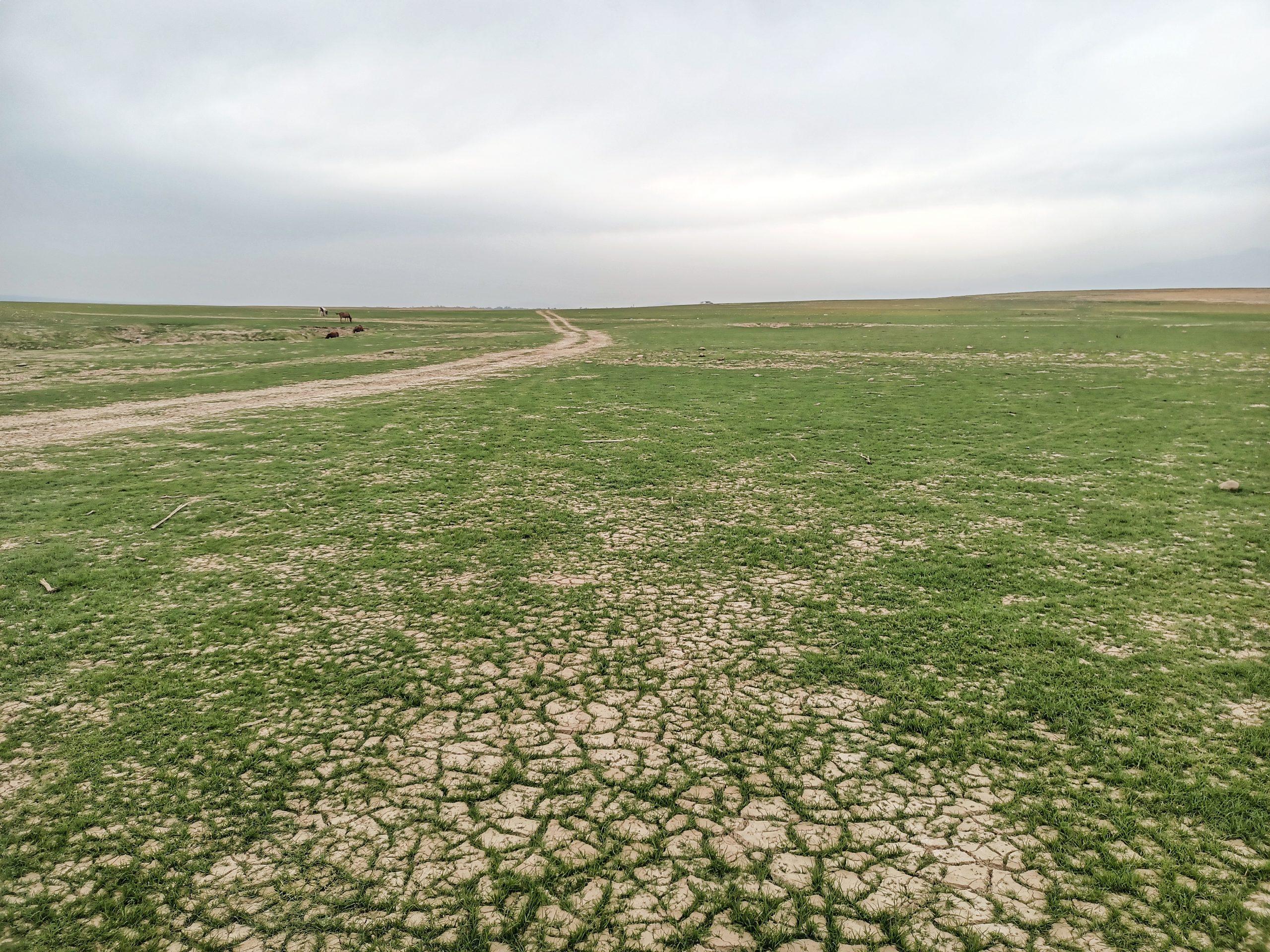 A plain land