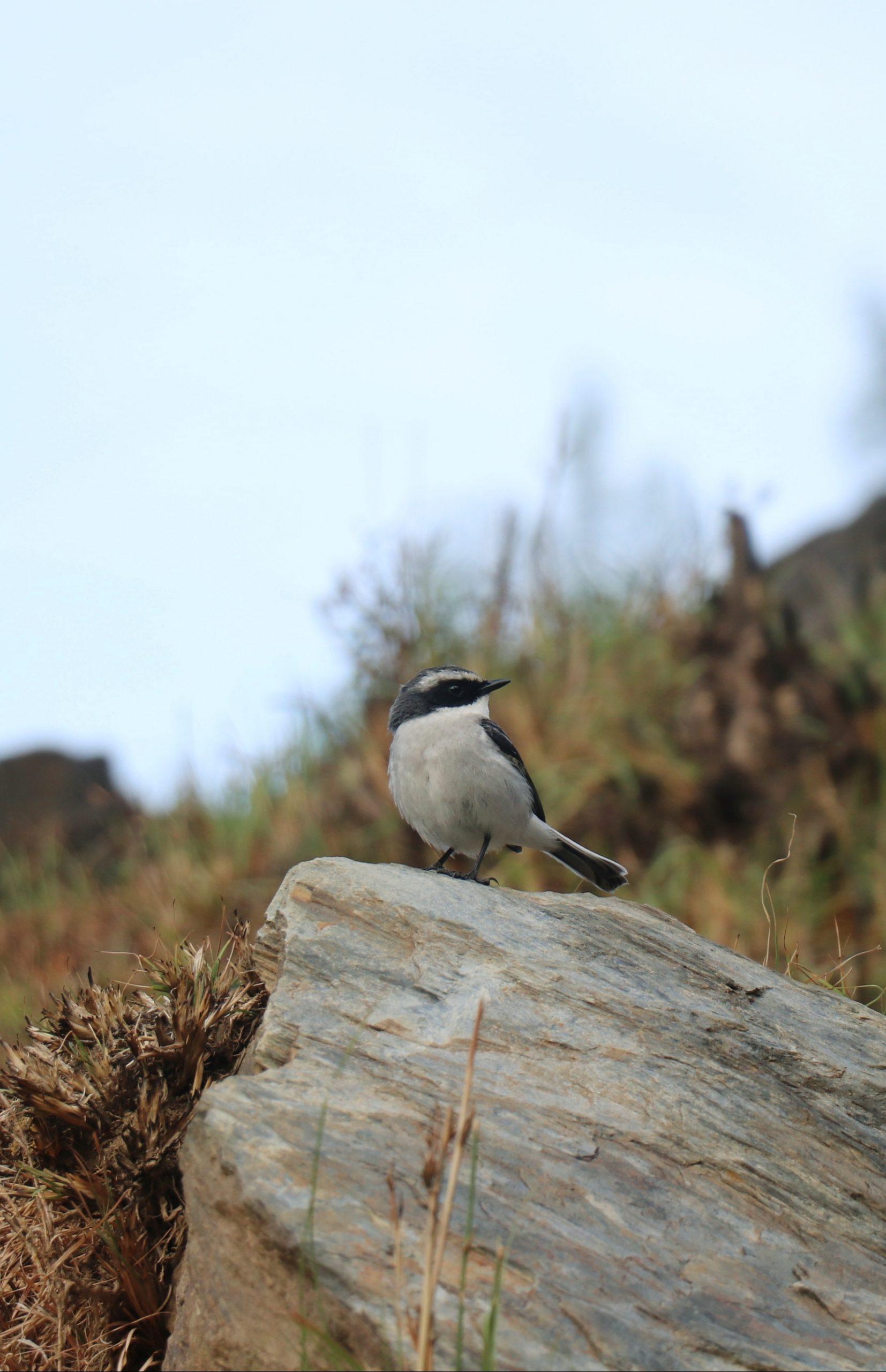 Beautiful bird on the rock