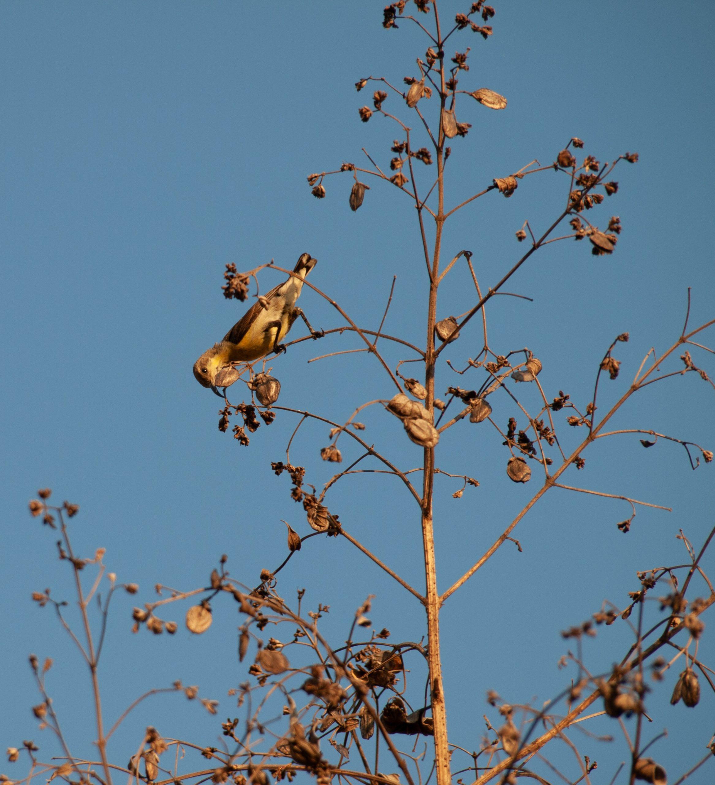 Bird sitting on the plant stem