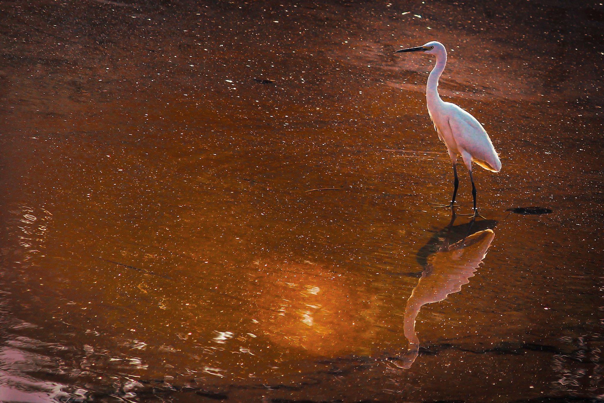 Birds reflection in the river