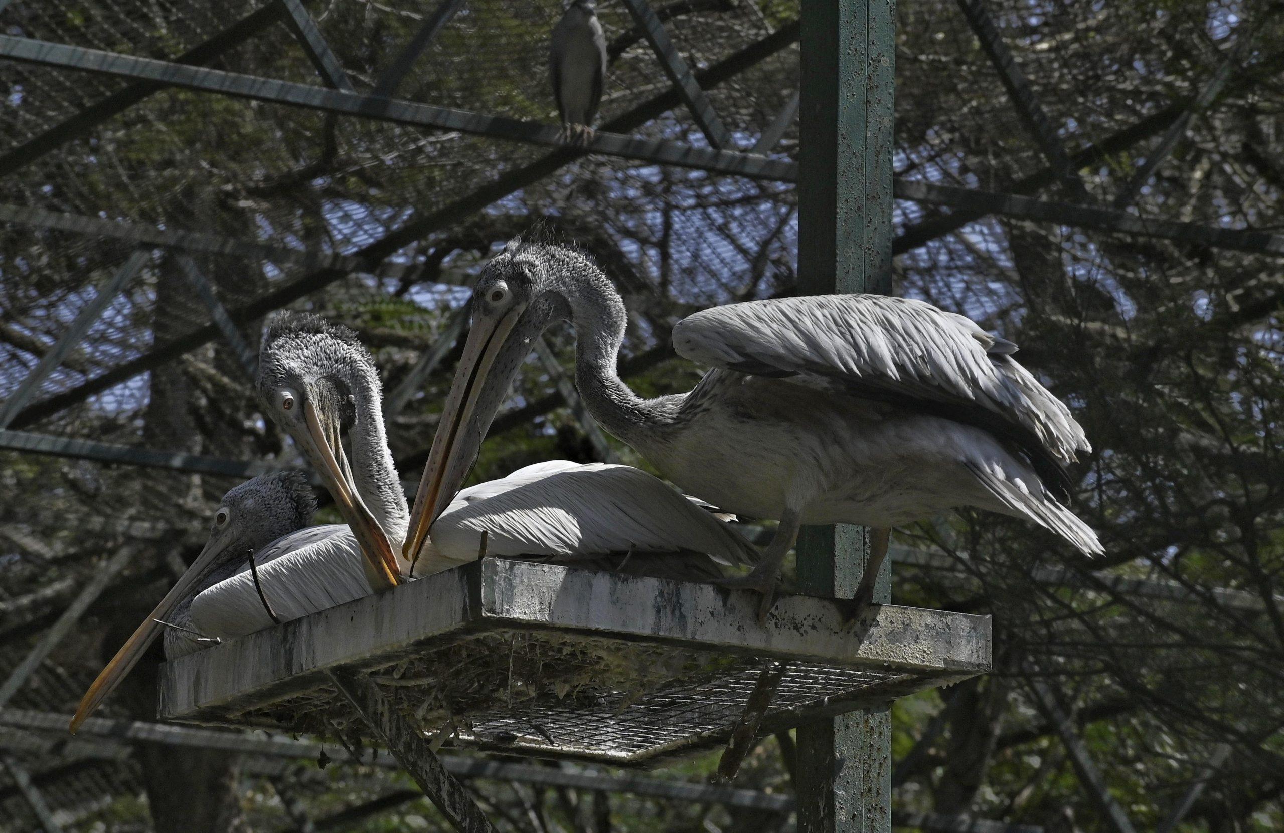 Birds with big beaks