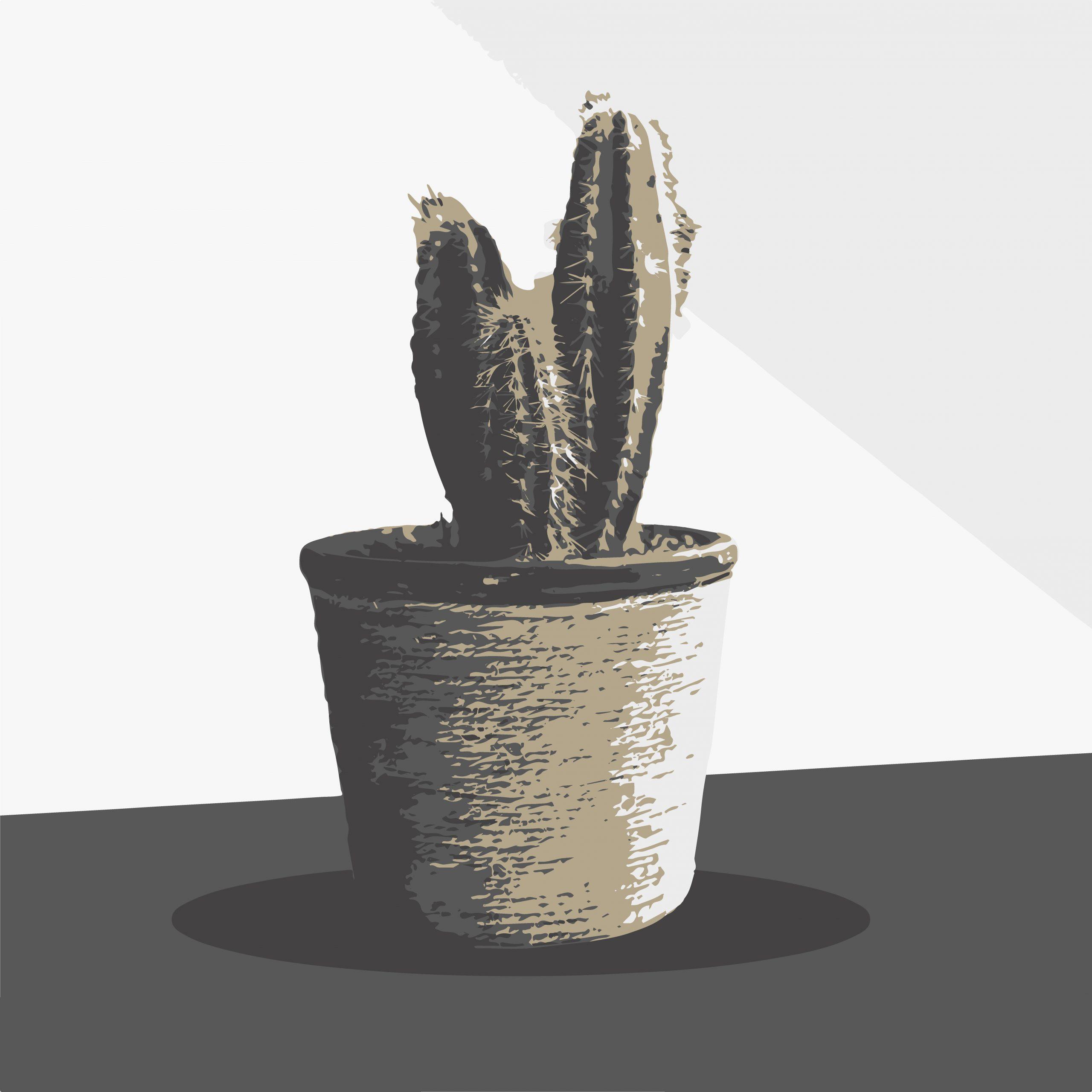 Blue Columnar Cactus plant