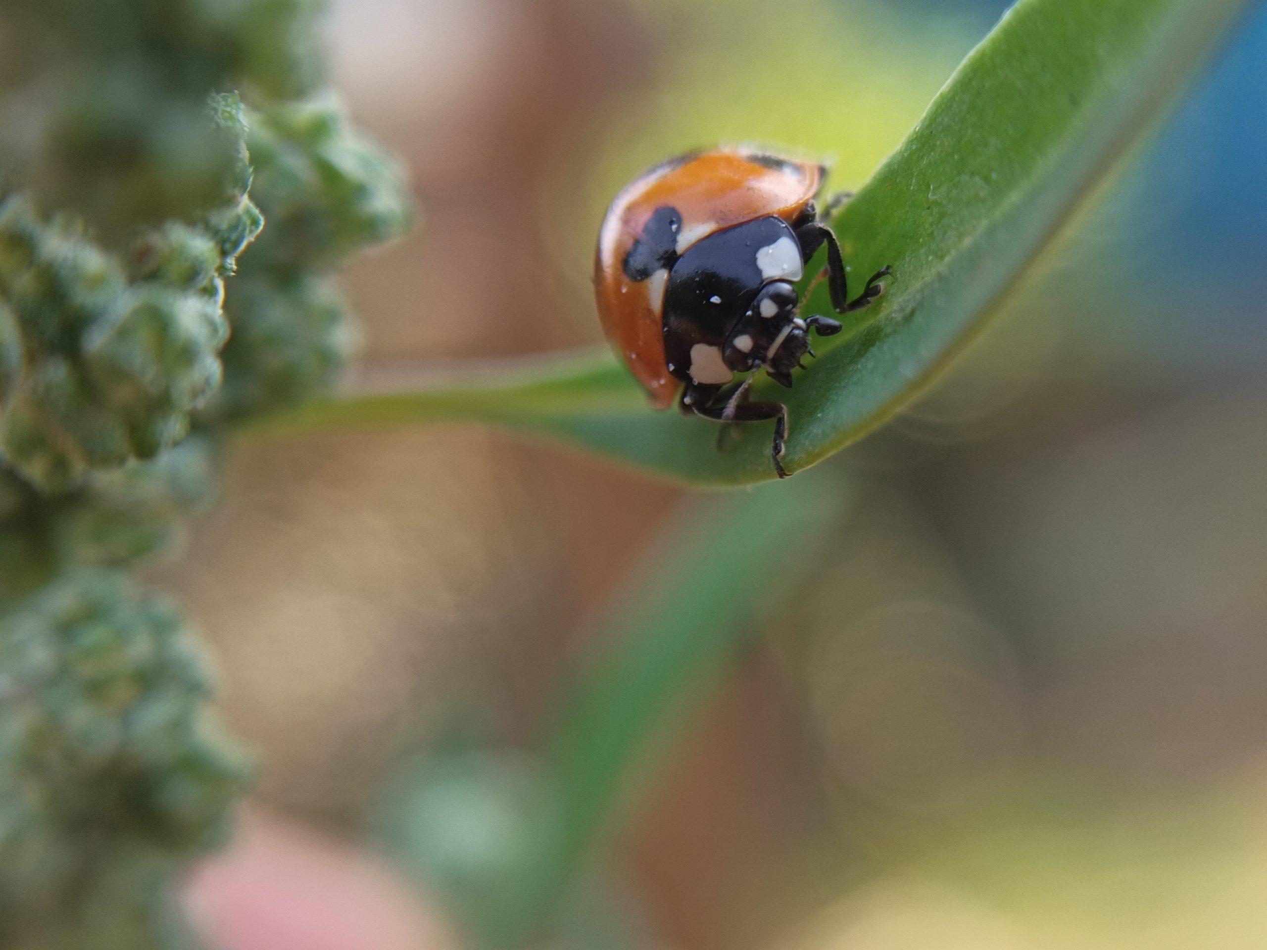 Bug on leaf