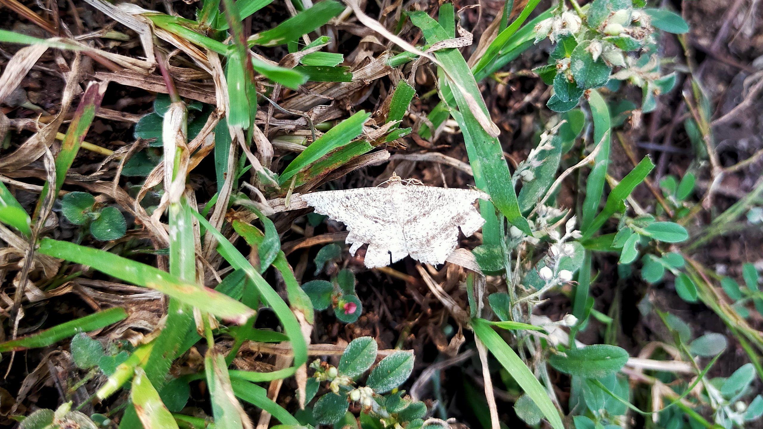 A butterfly on grass