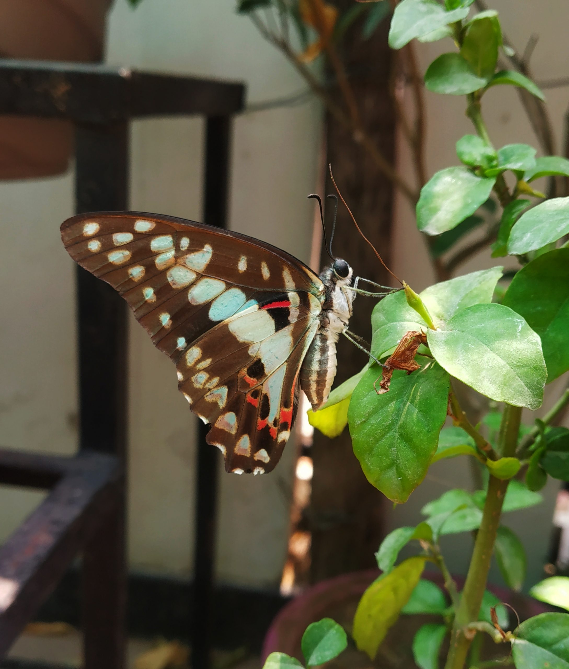 Butterfly on the plant leaf