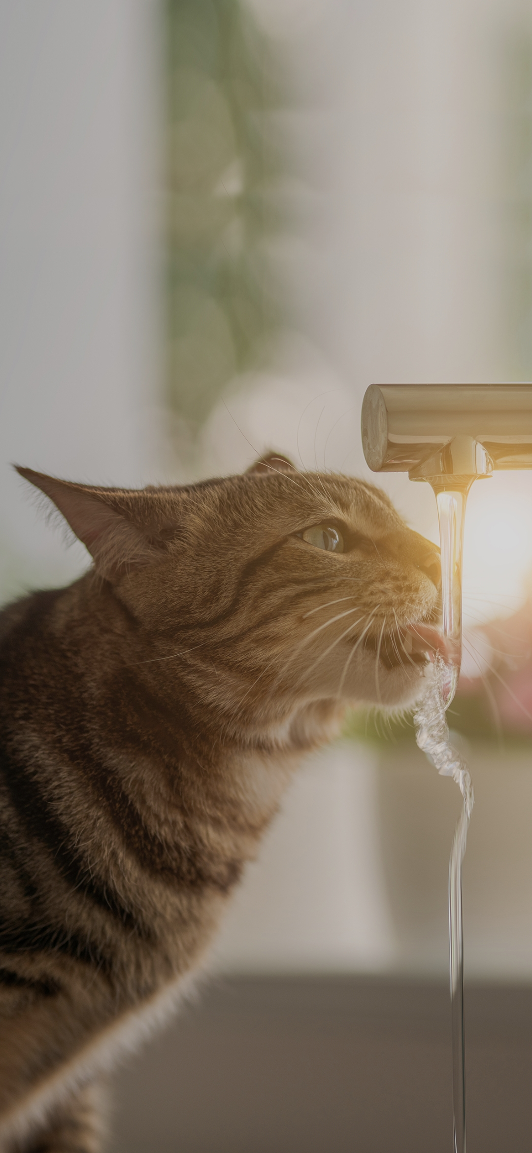 Cat drinking water from tap