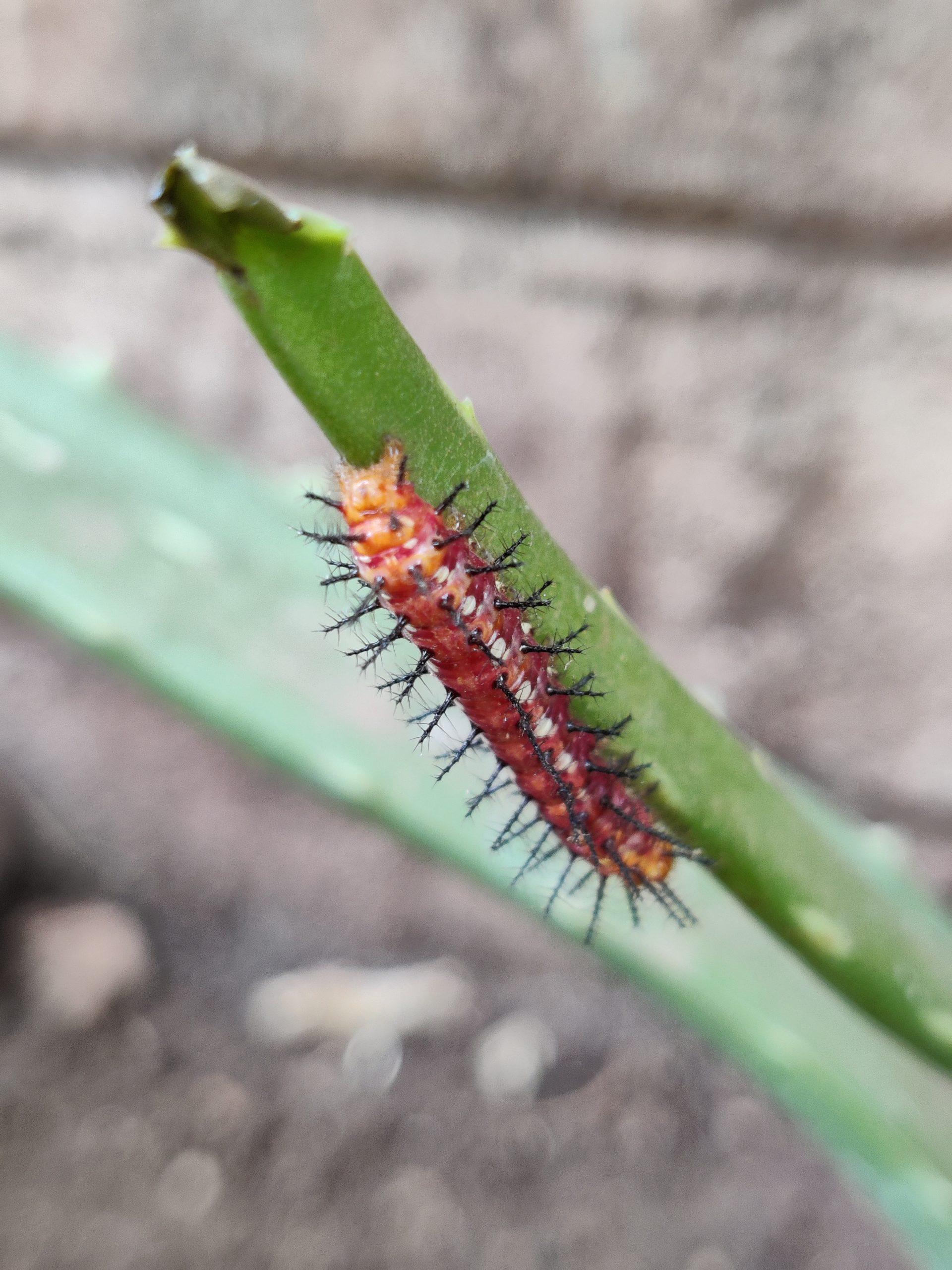 Caterpillar on plant leaf