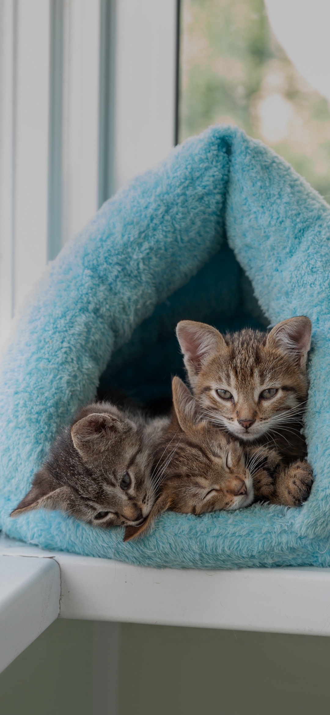 Cats sleeping in the blanket