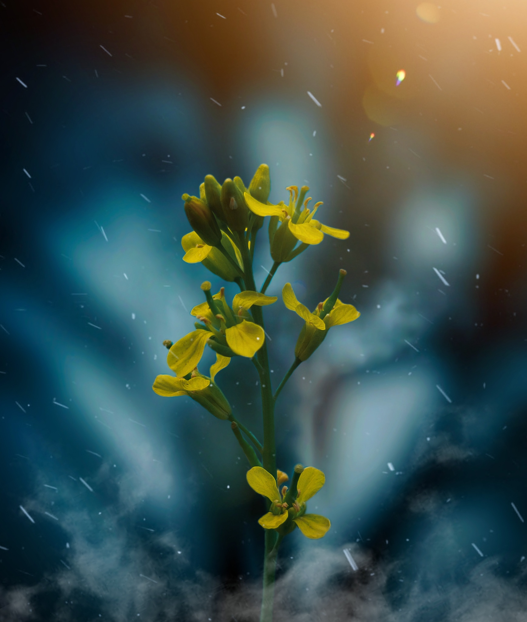 Creative editing of flower picture