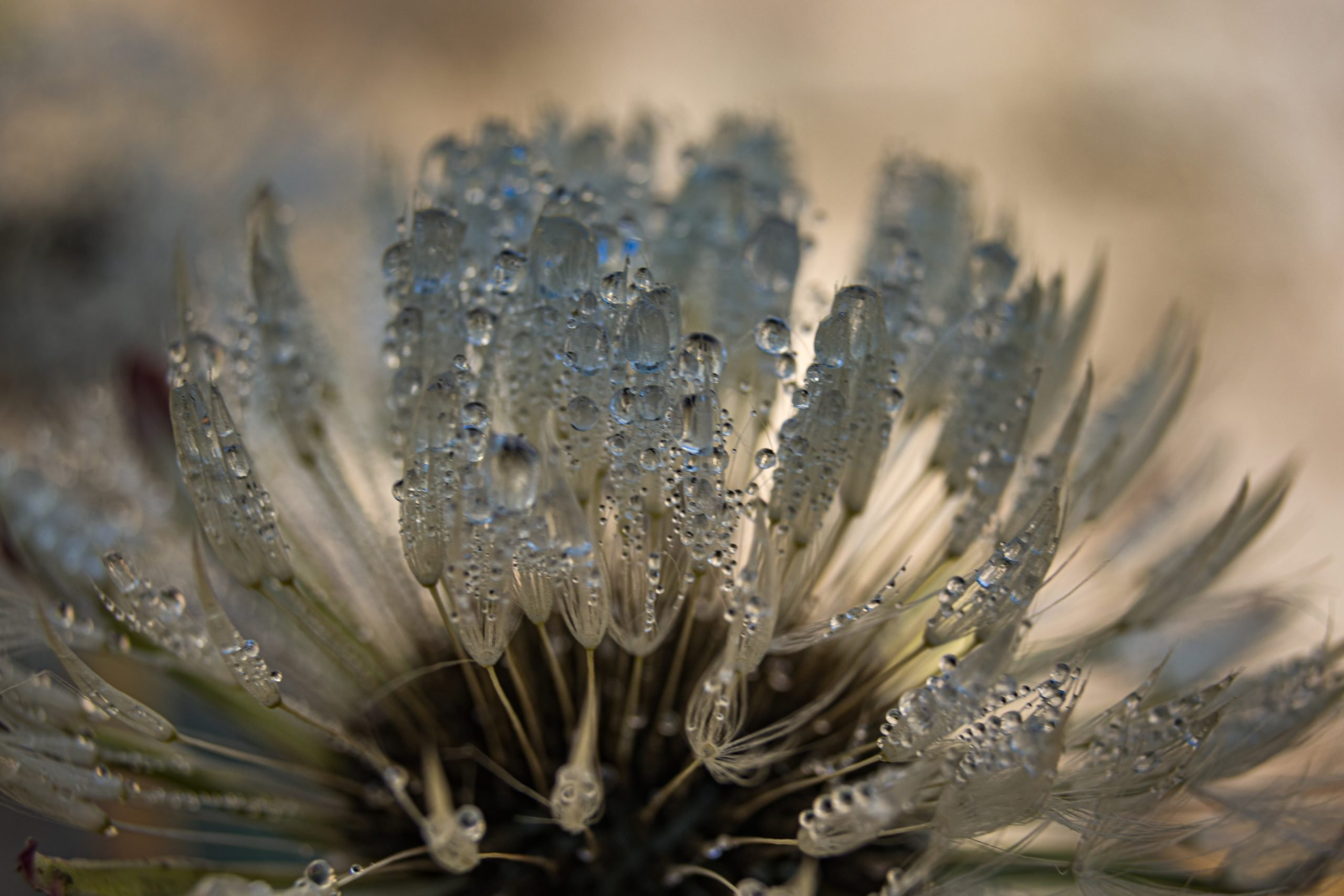 Dew drops on the plant leaf