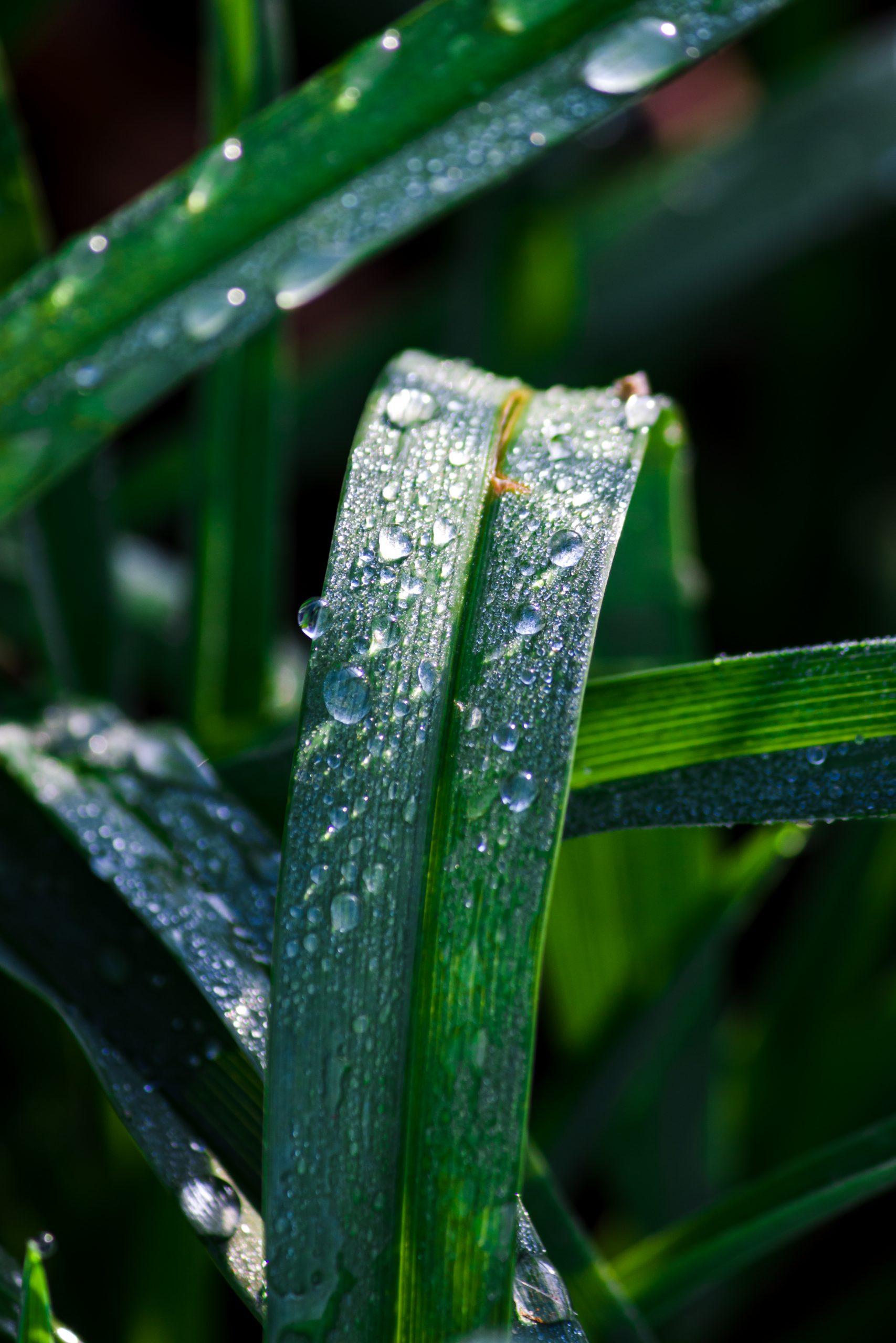 Dewdrops on green leaf