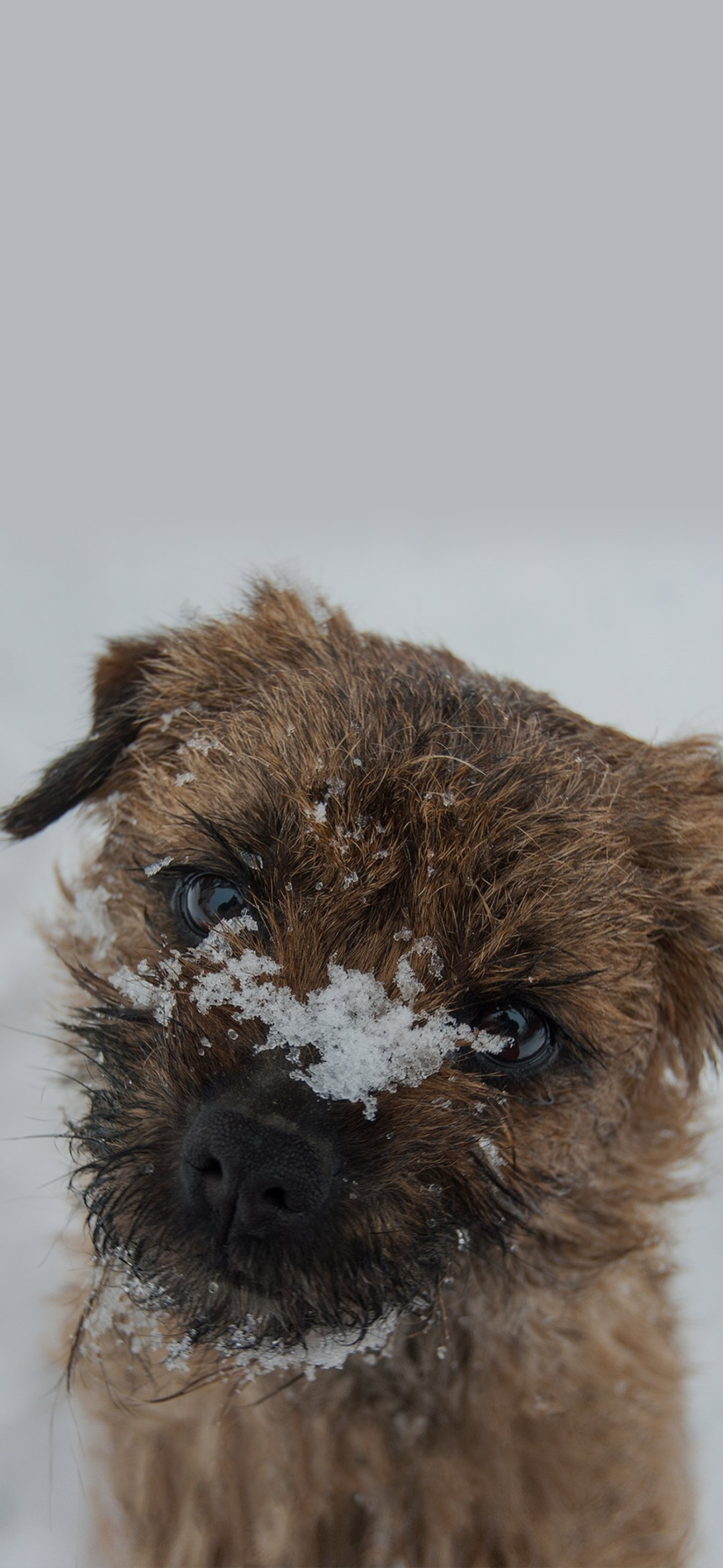 Dog in the snow