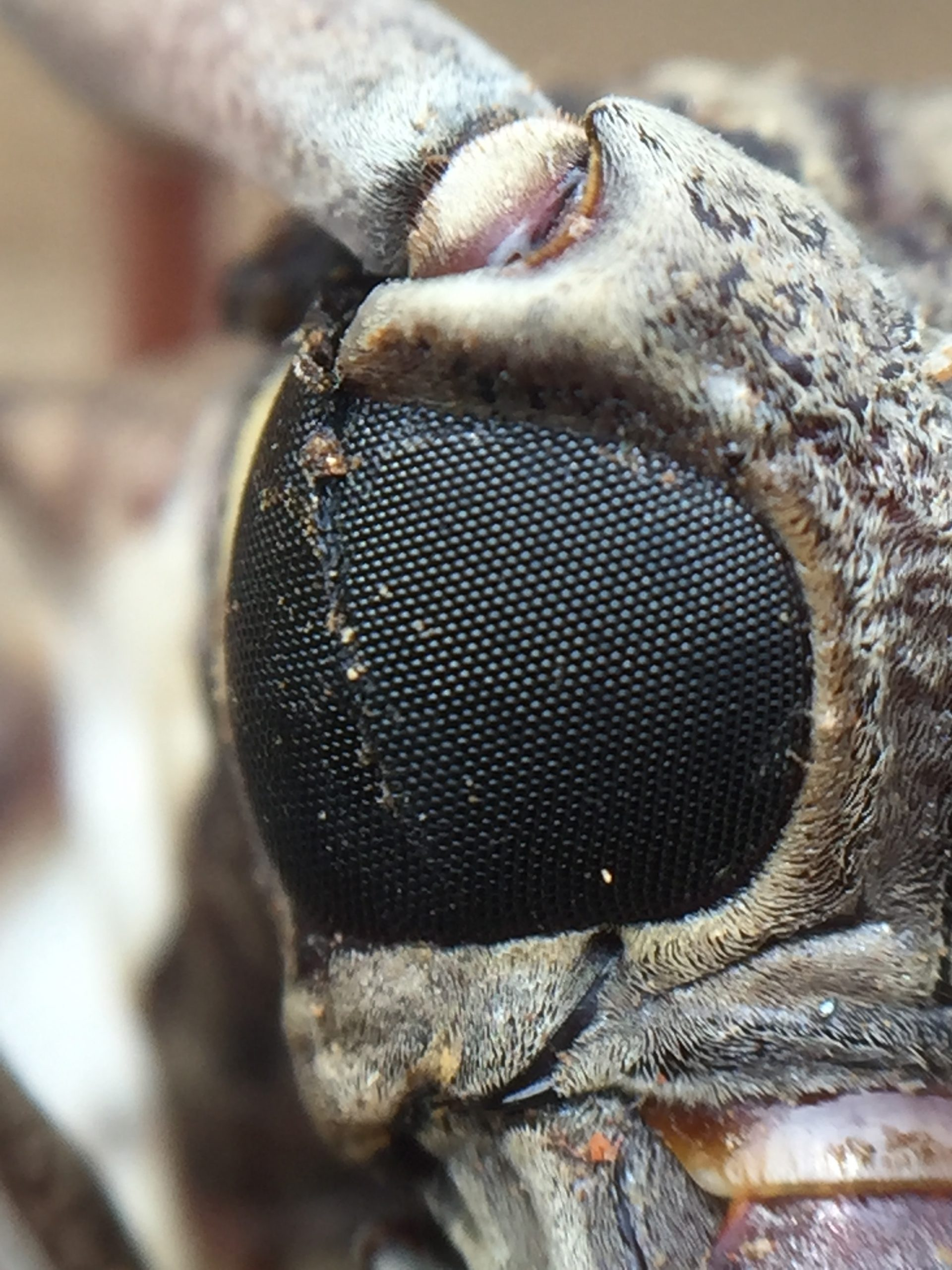 Eye of an artificial insect