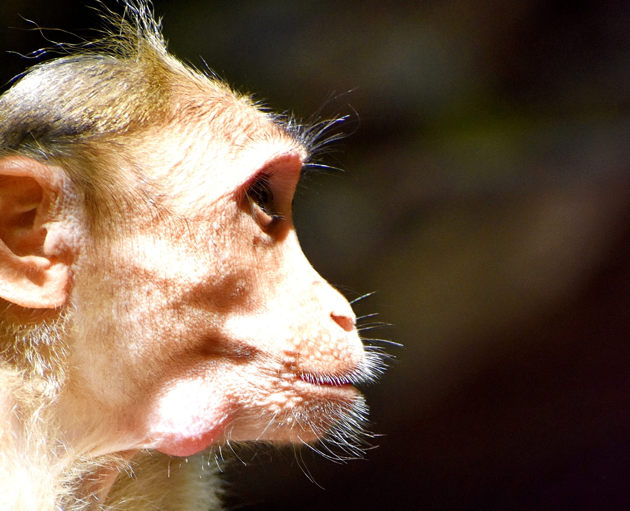 Face of a monkey