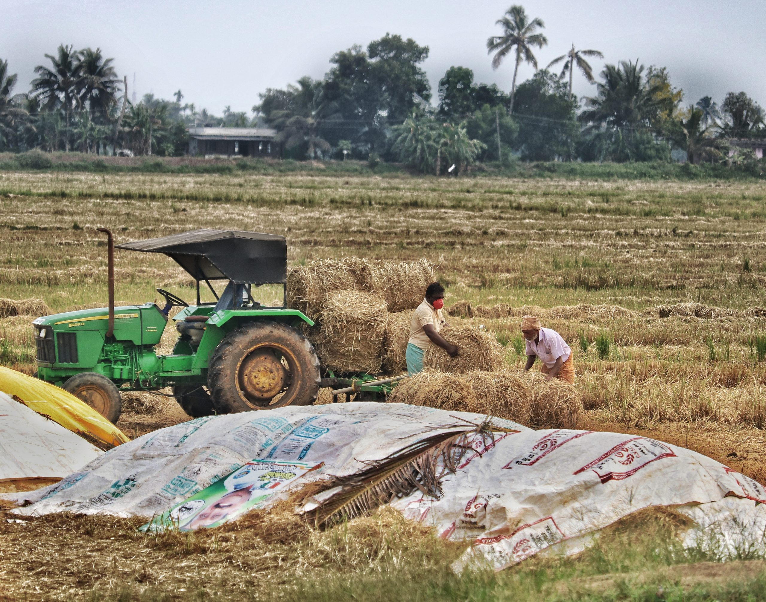 Farmers loading fodder in a tractor