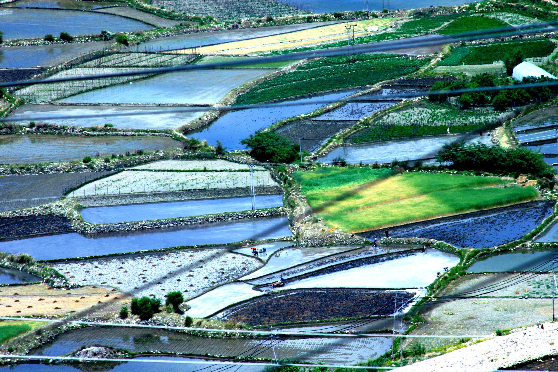 Farming in Paro valley, Bhutan