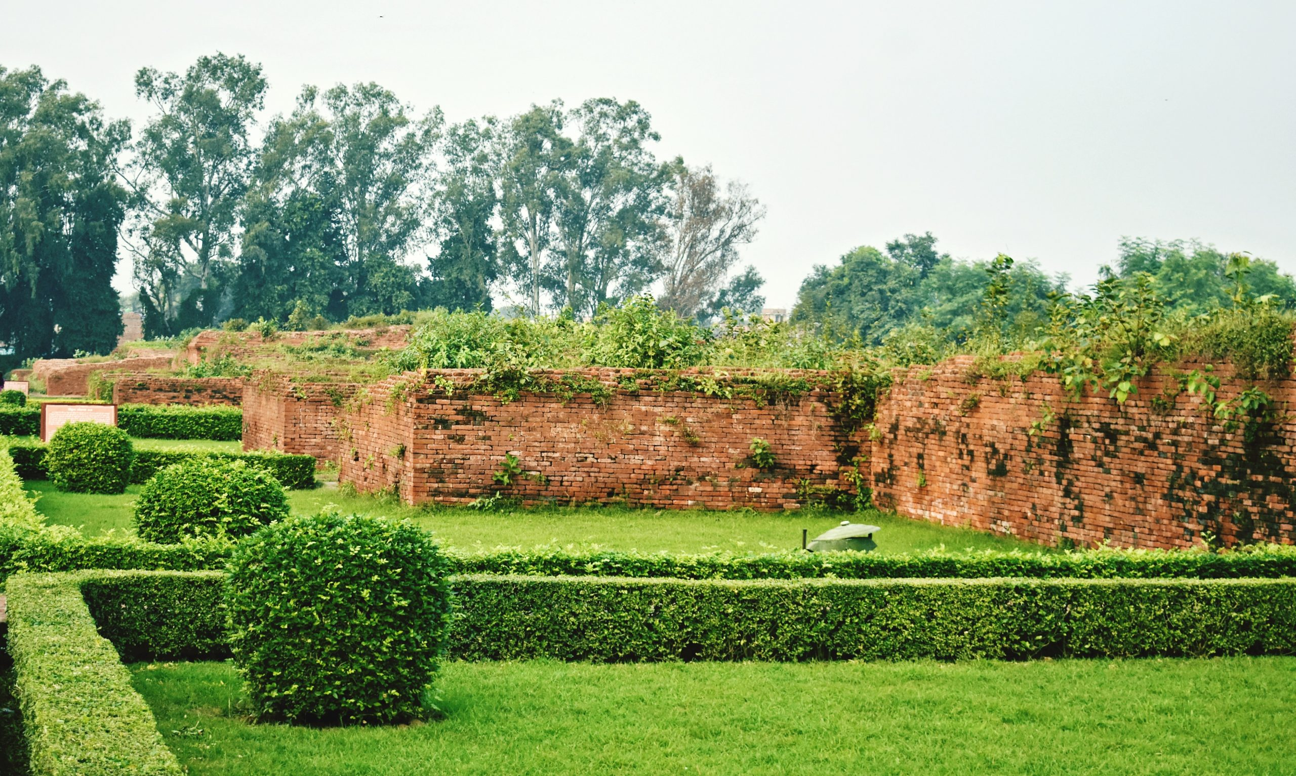 Grass Field in the garden